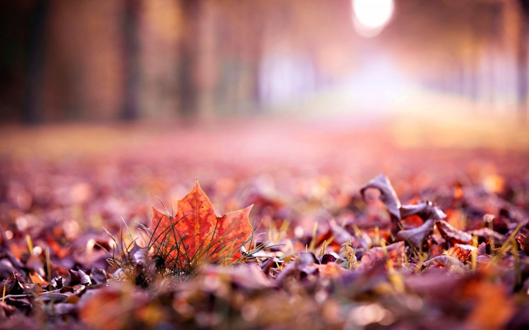 Leaves Autumn Nature Macro