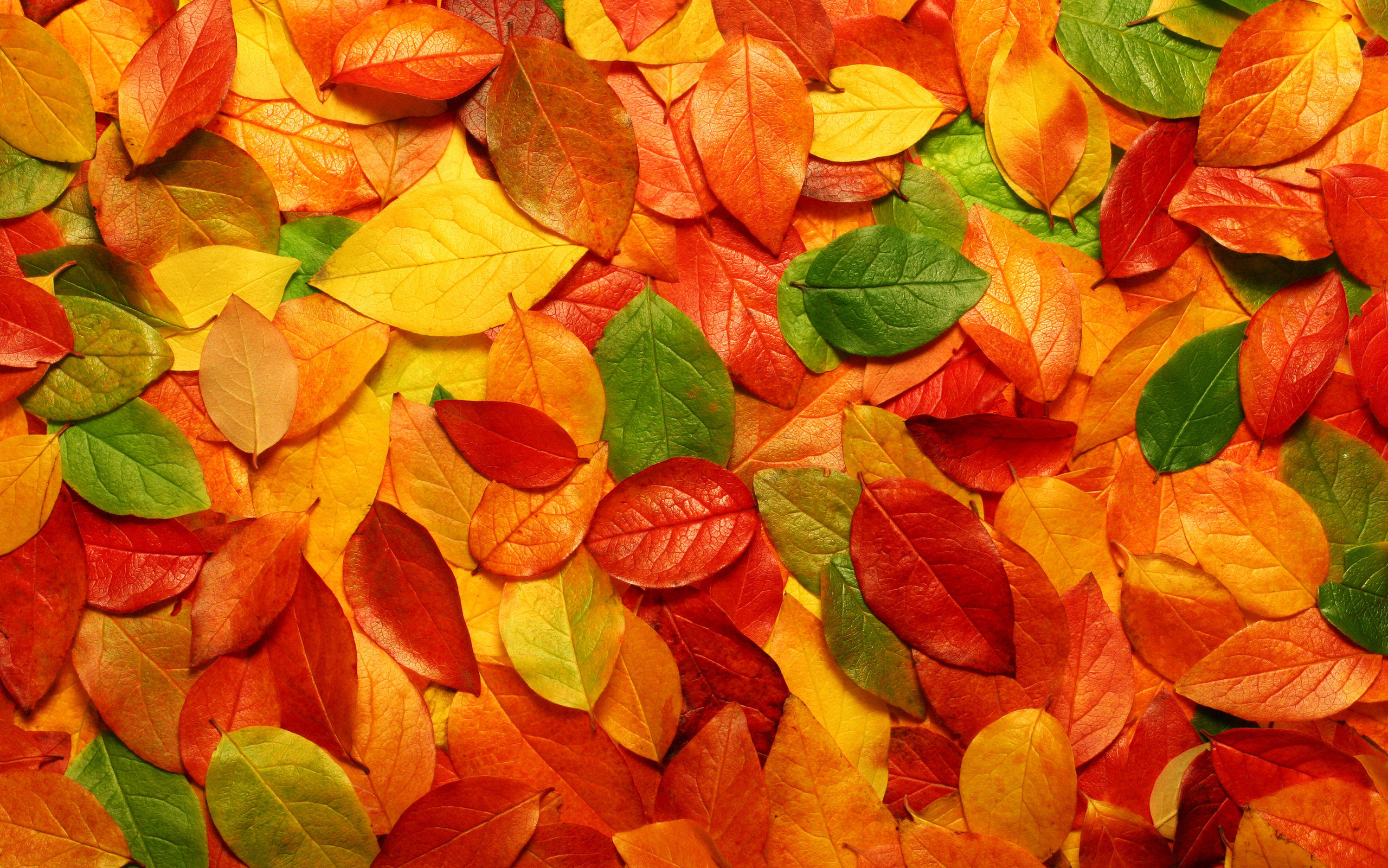 Autumn Leaves Background Wallpapers 2560x1600px