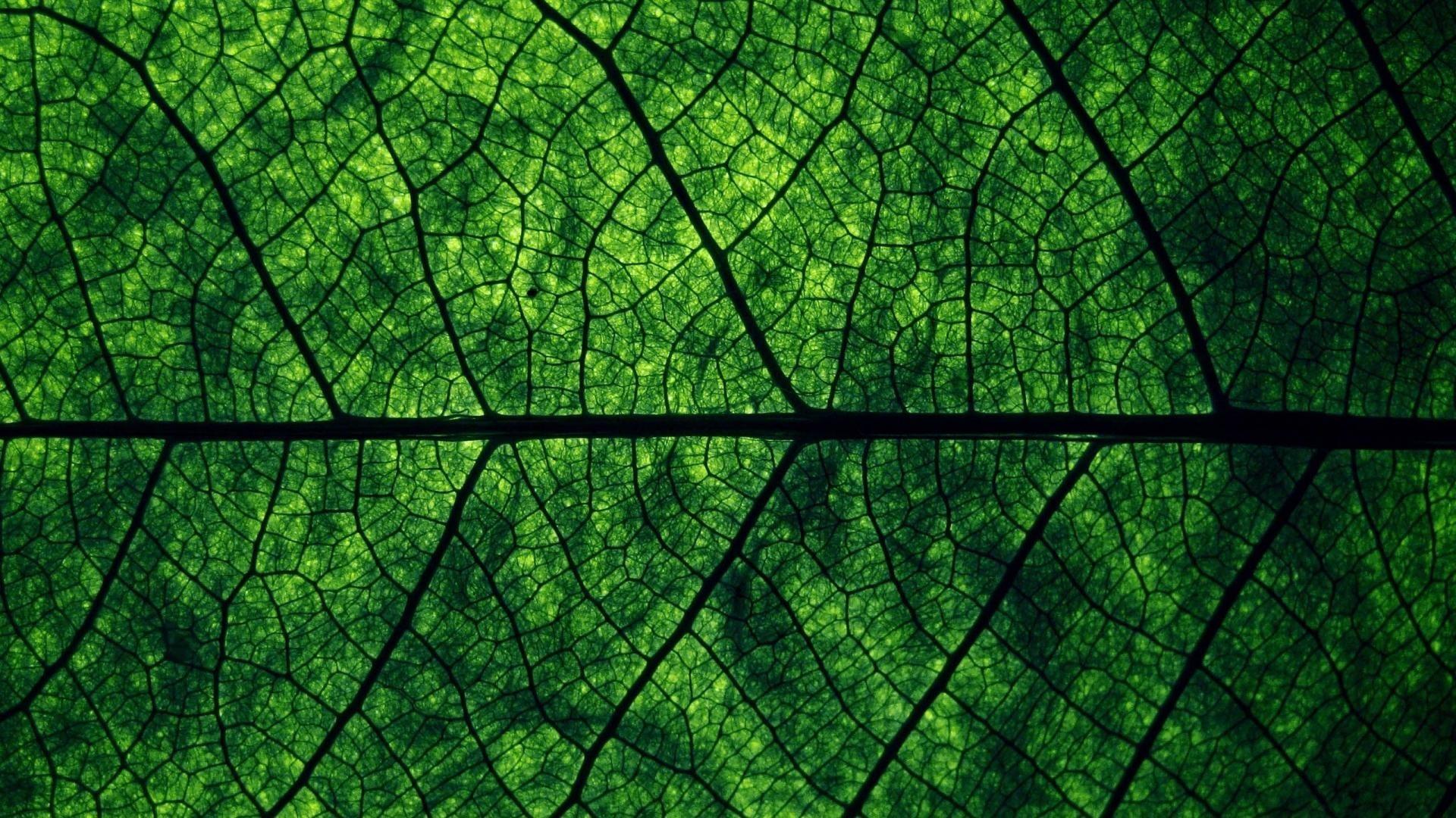 Leaves Macro 39021 1680x1050 px