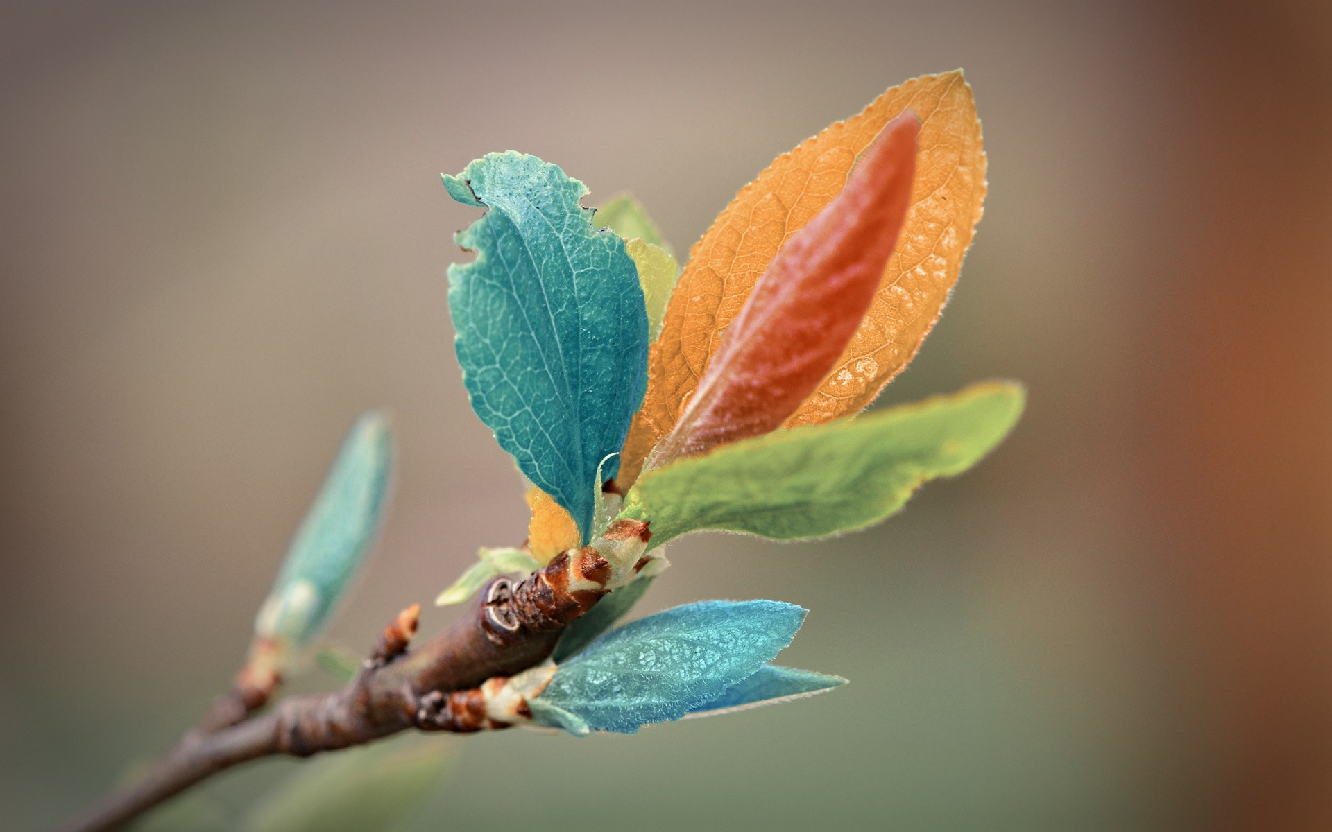Leaves Macro Wallpaper 39003 1920x1080 px