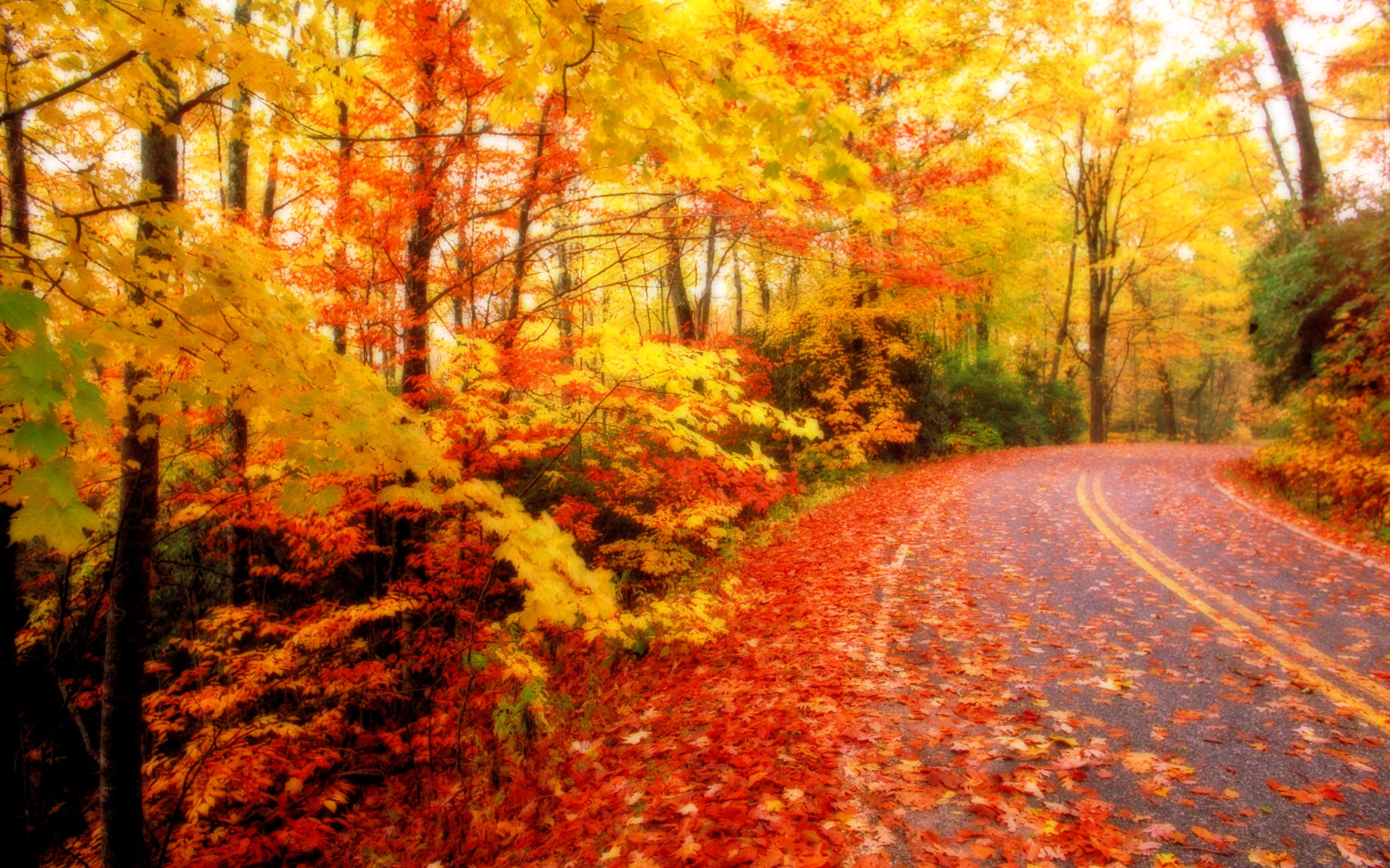 DOWNLOAD WALLPAPER Fall Leaves in Autumn - FULL SIZE ...