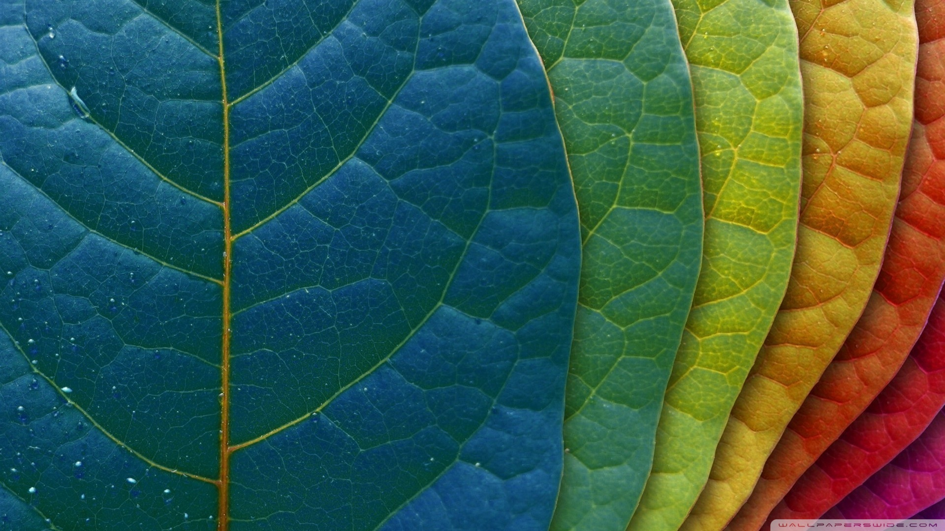 Leaves Wallpaper