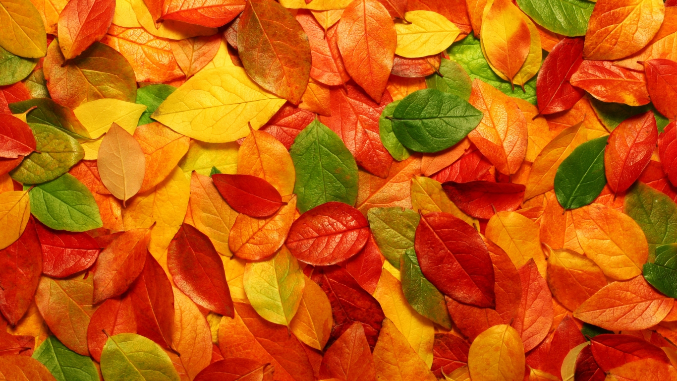 Leaves Wallpaper Autumn leaves free wallpaper