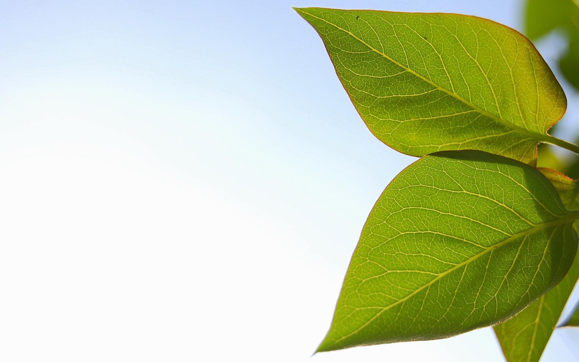 Leaves Wallpaper; Leaves Wallpaper; Leaves Wallpaper ...