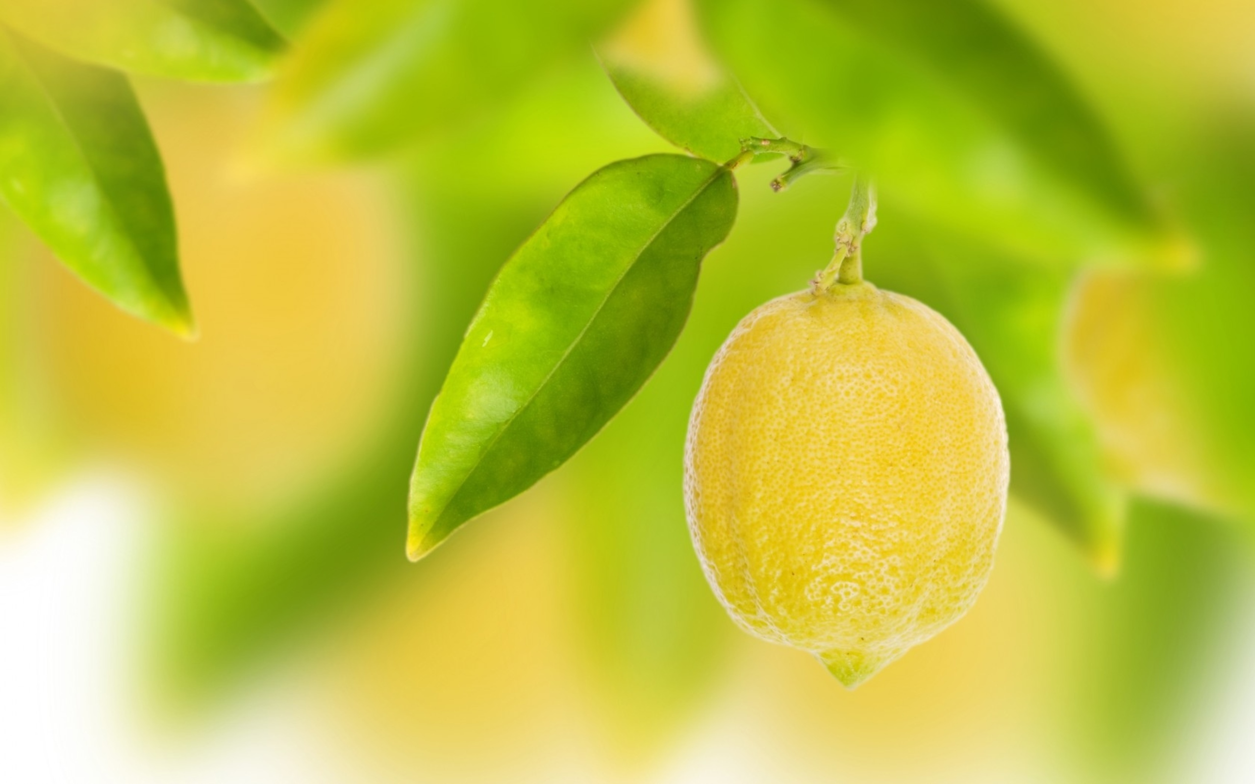 HD Wallpaper | Background ID:365482. 2560x1600 Food Lemon
