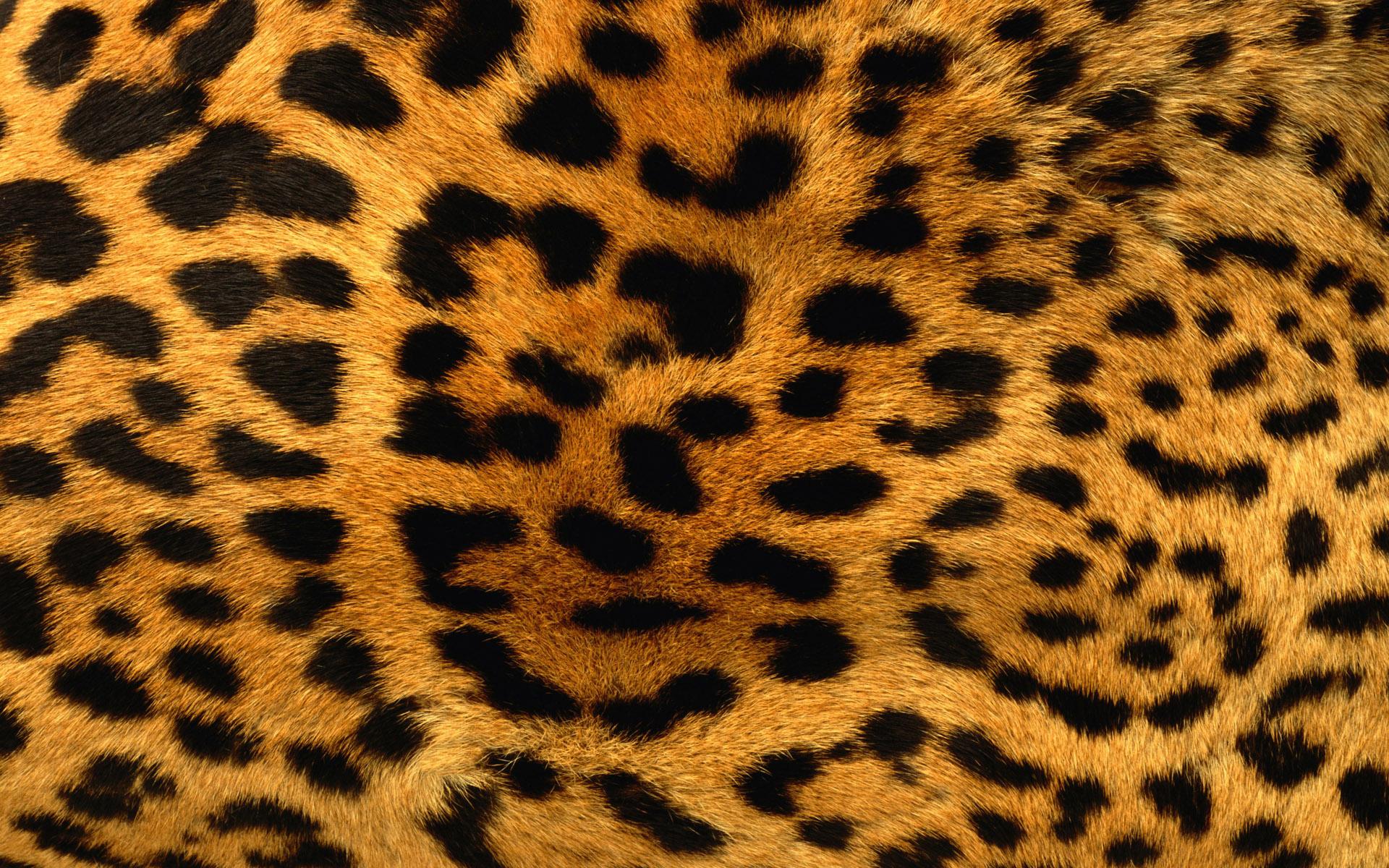 Leopard Background 18395 1920x1080 px