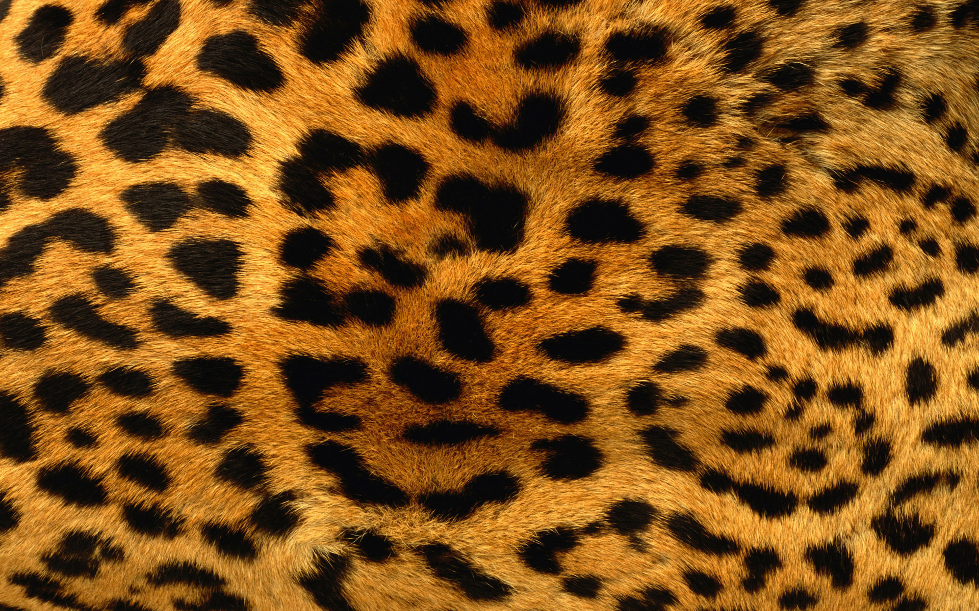 Leopard Print Wallpaper 18814