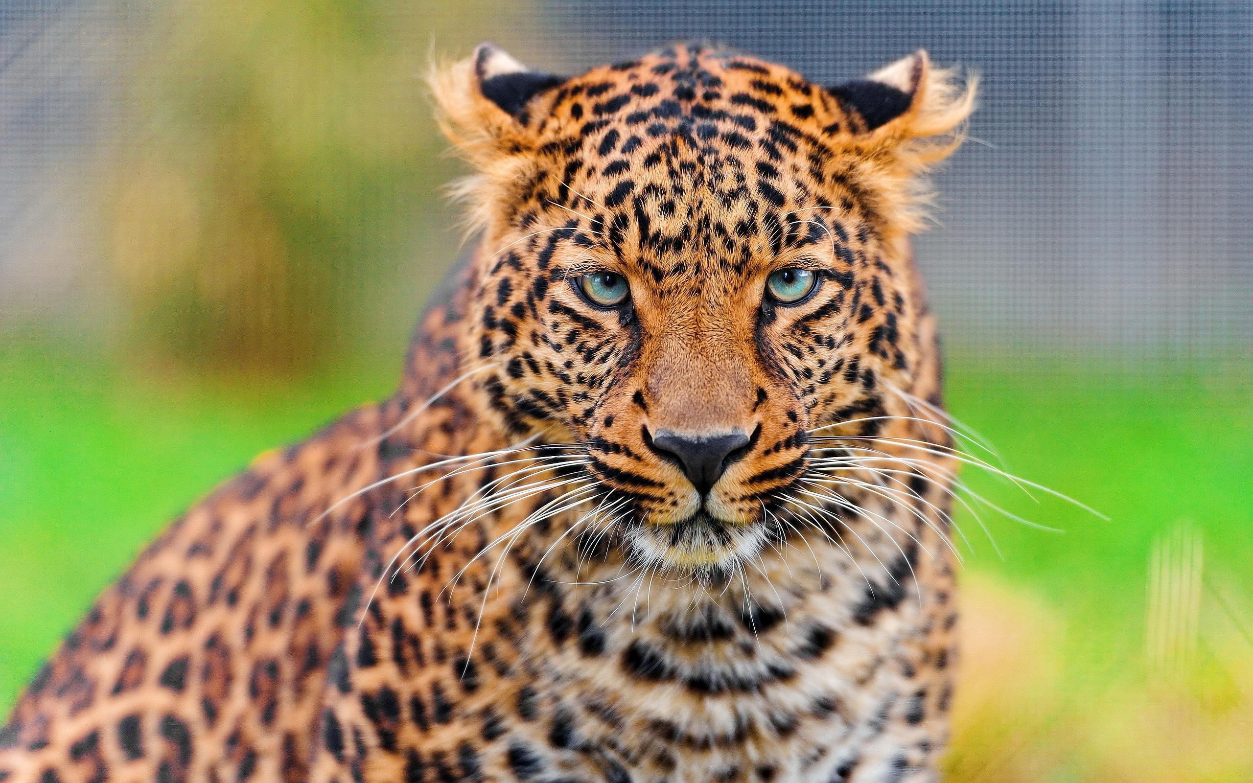 Leopard Hypnotic Look
