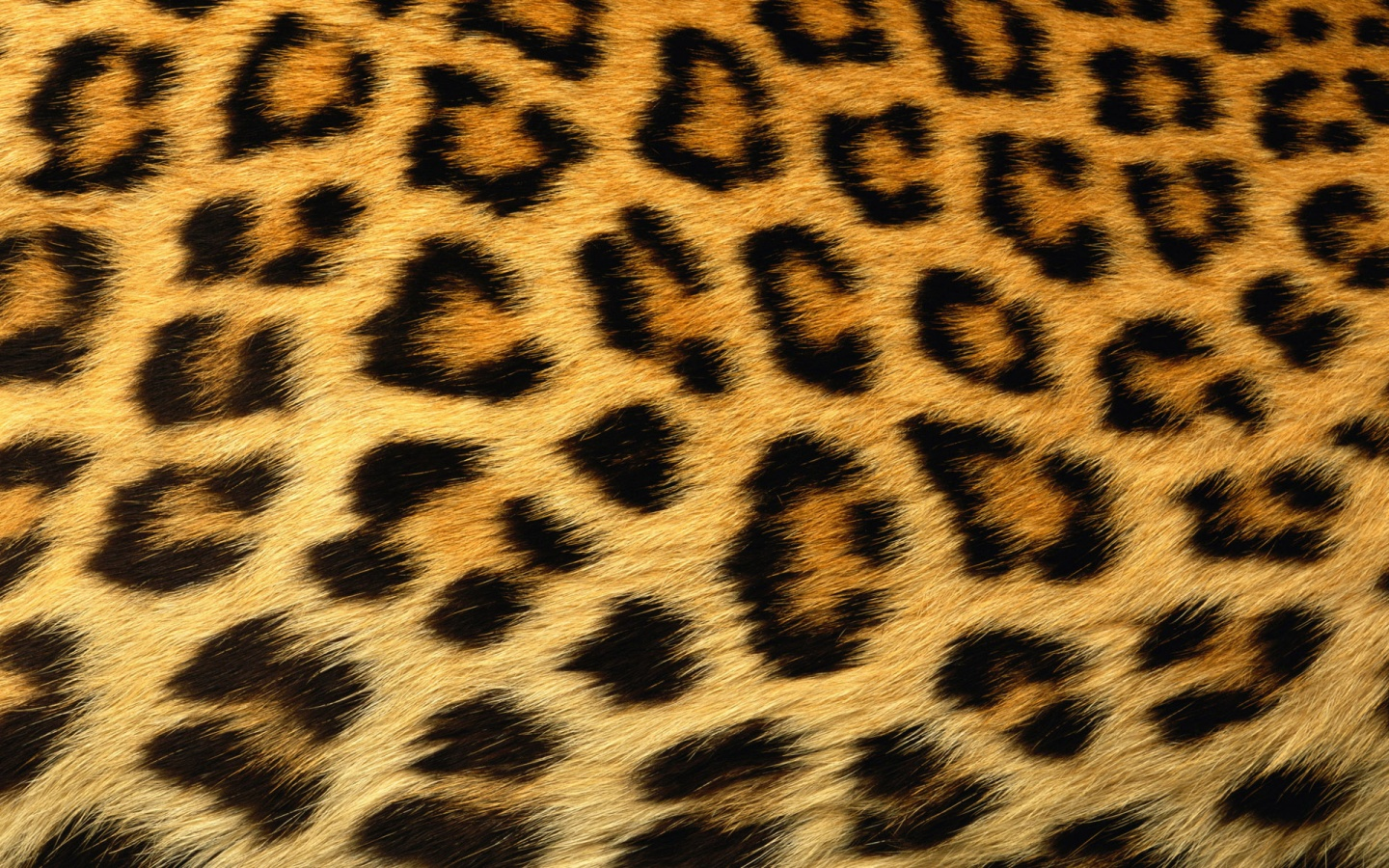 Leopard Print Background X Image. Rating: Click Stars To Rate