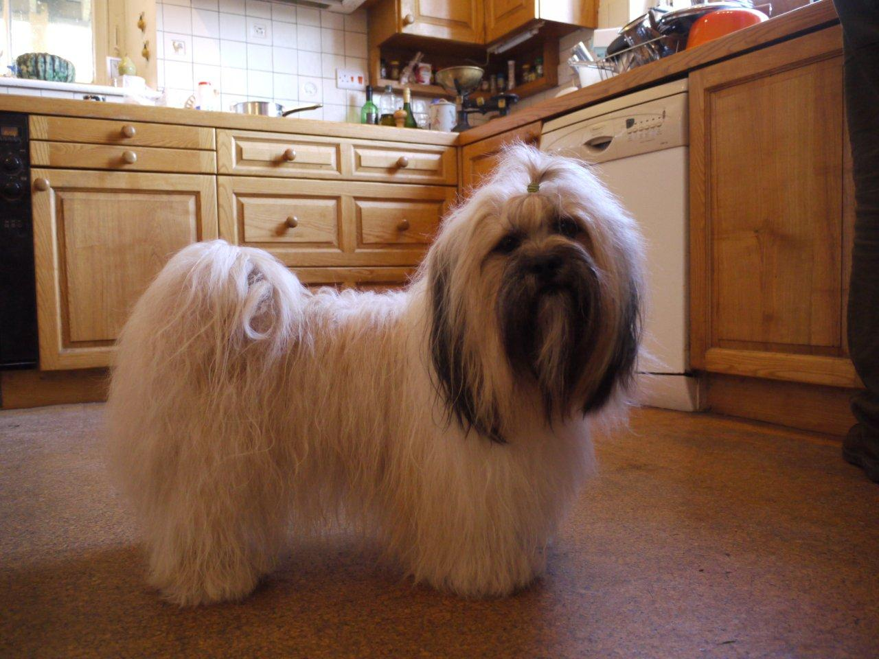 Otto, freshly groomed