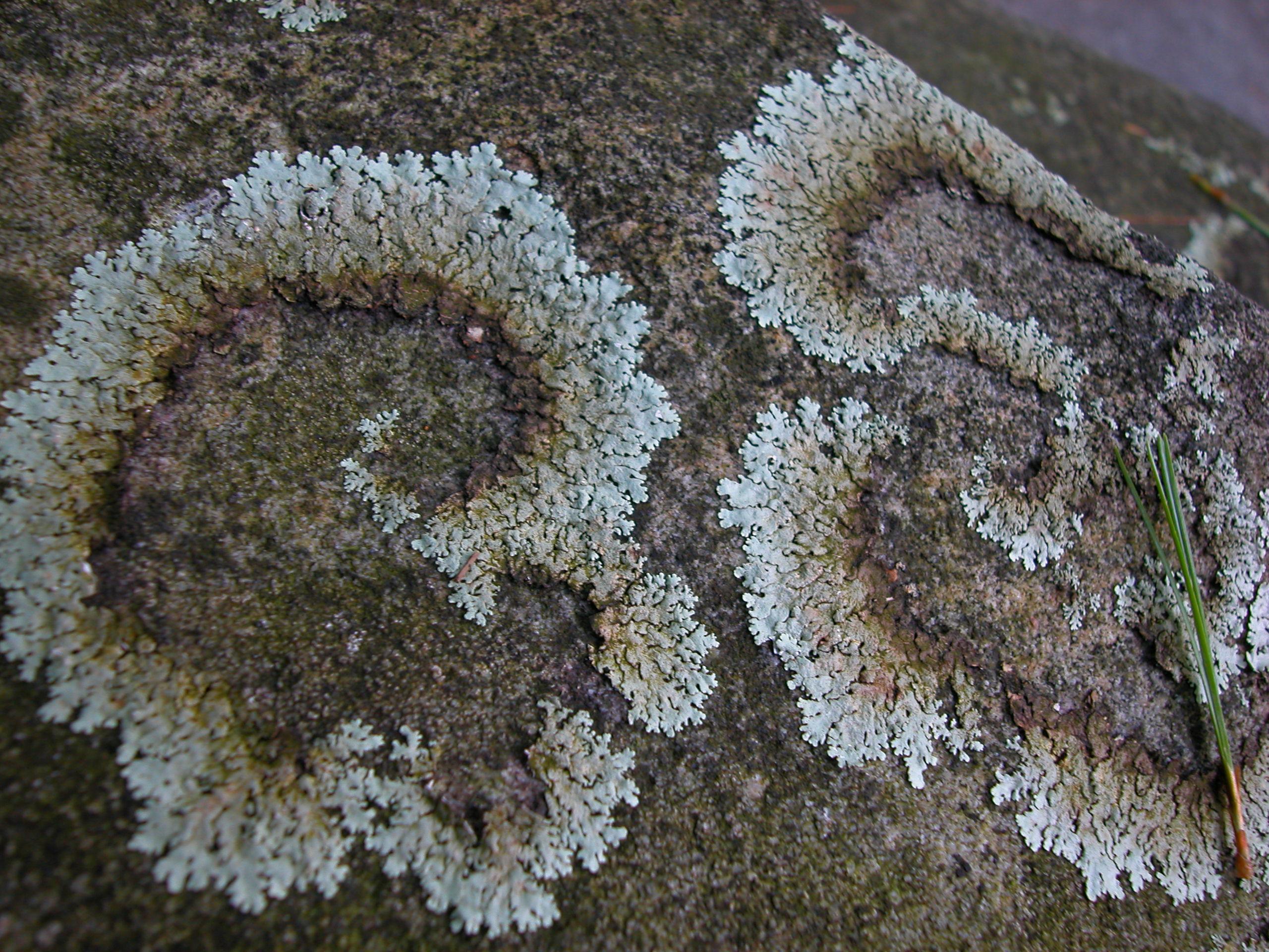File:Plants flowers ice rocks lichens 230.jpg