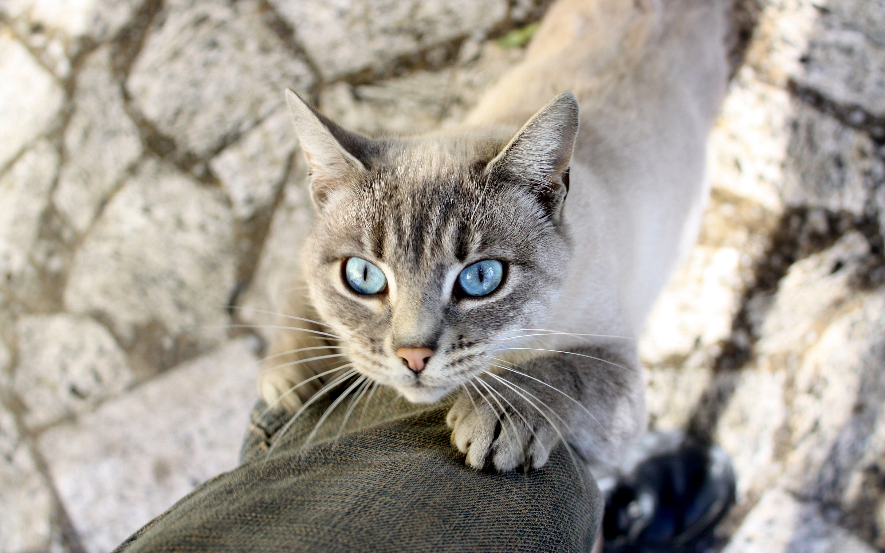 Light blue cat eyes