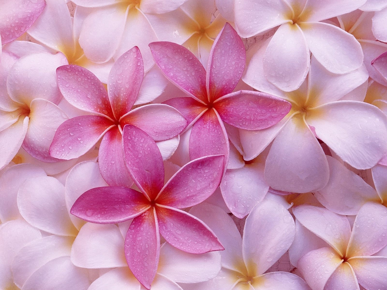 Light Pink Flowers Wallpaper 1600x1200 78283