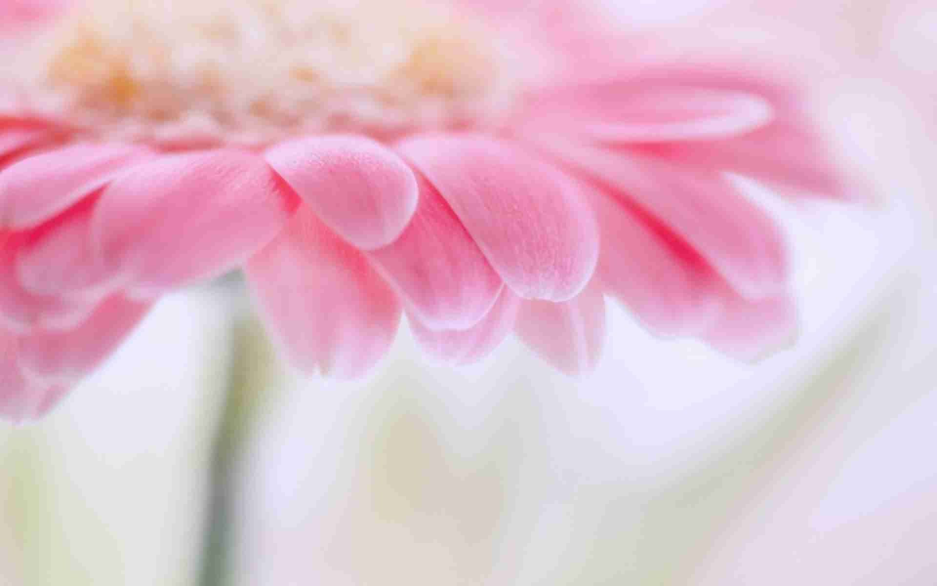 Light Pink Flowers Wallpaper 1920x1200 4902