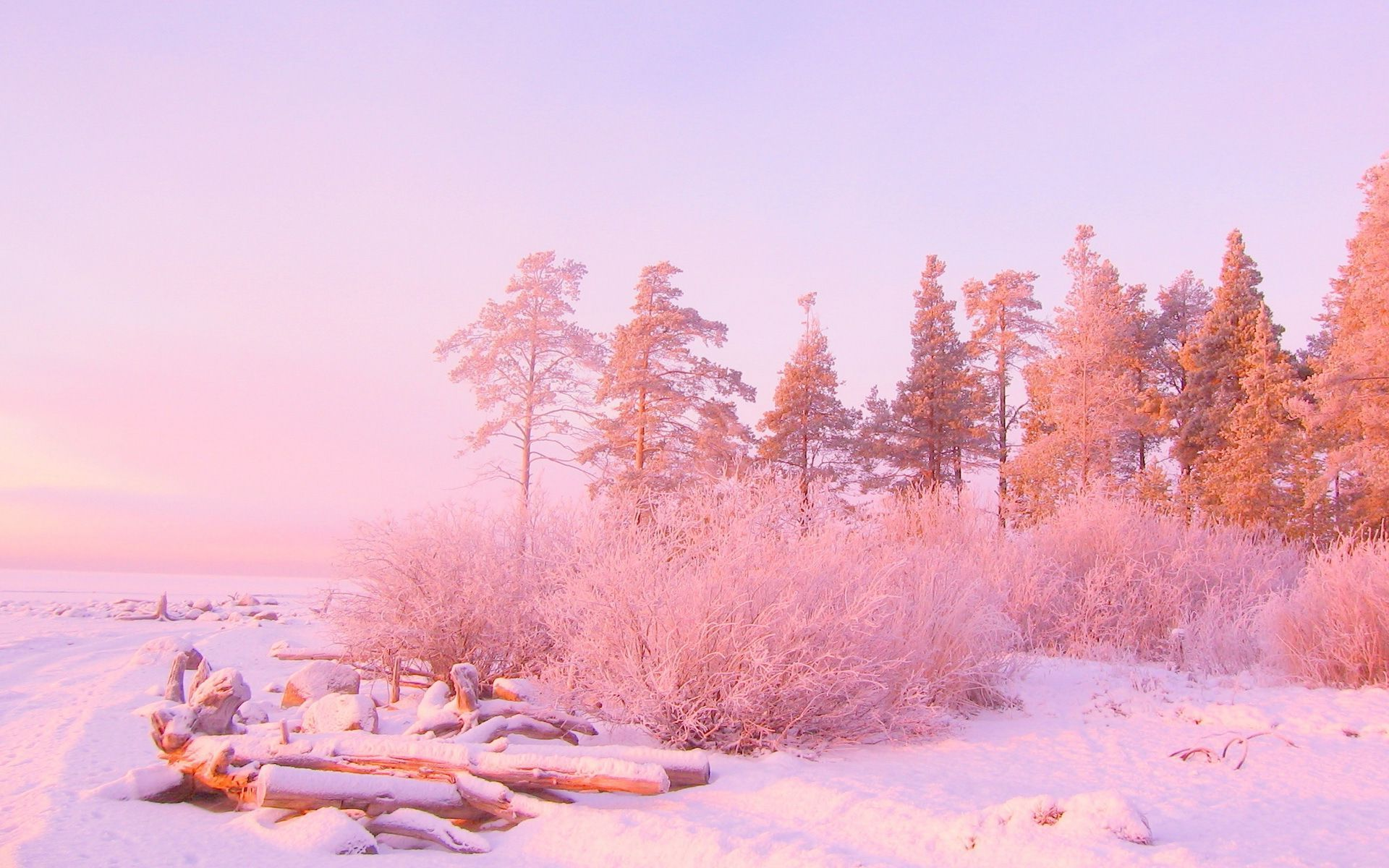 Light Pink Nature Wallpaper