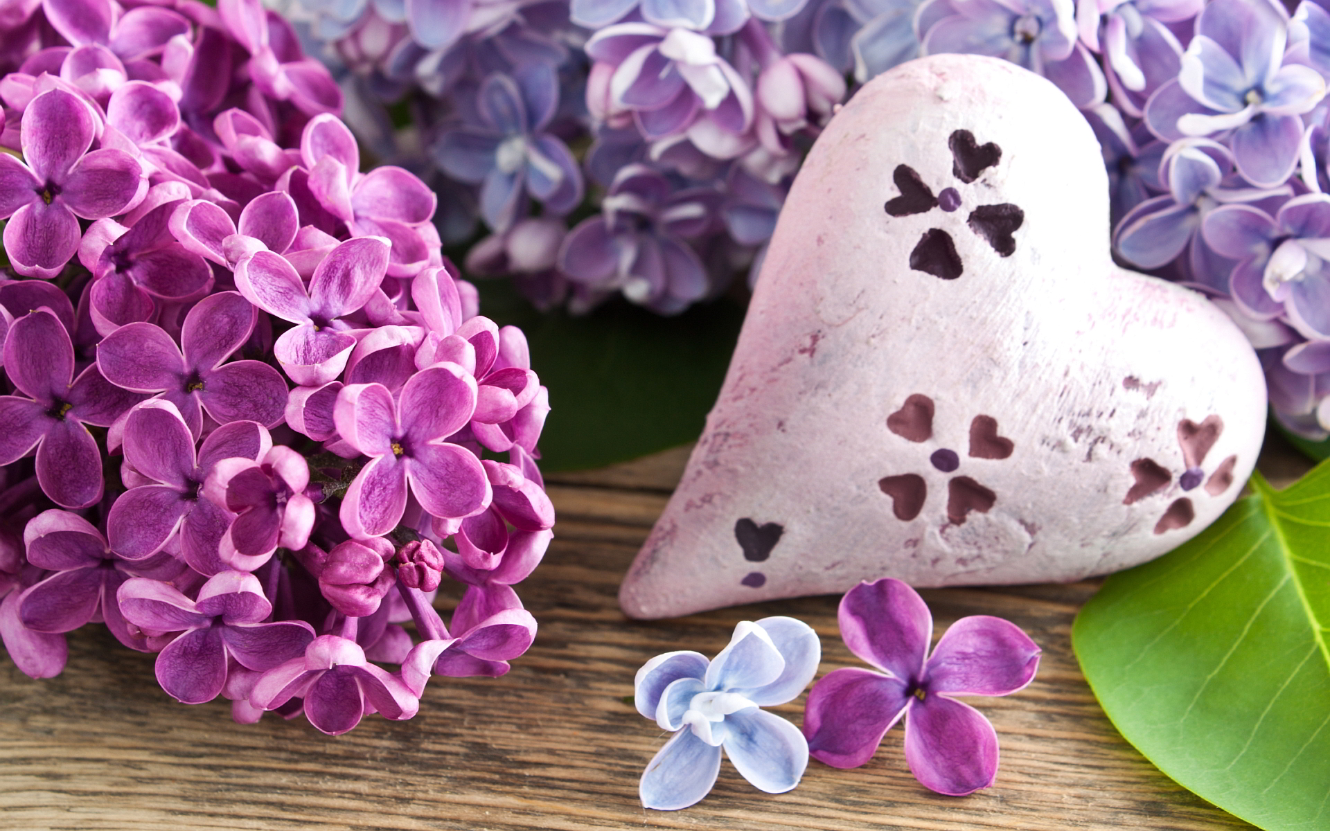 Heart lilac flowers