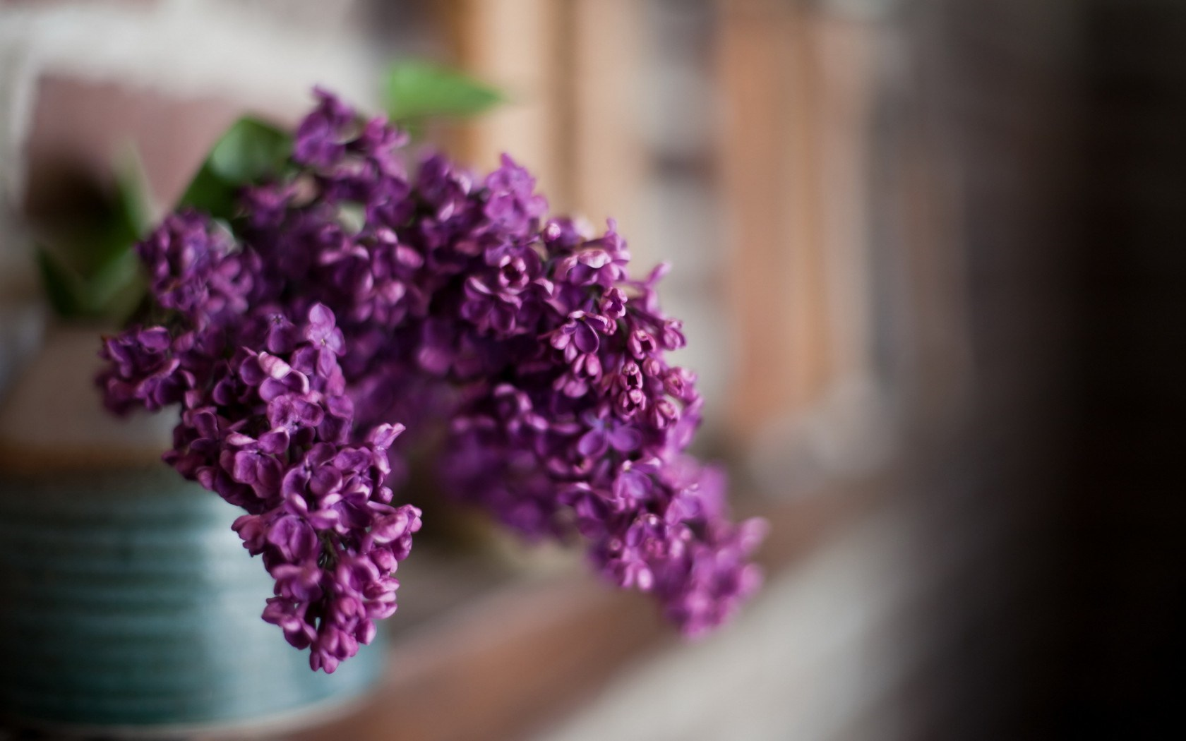 Lilac Flowers Macro Close-Up