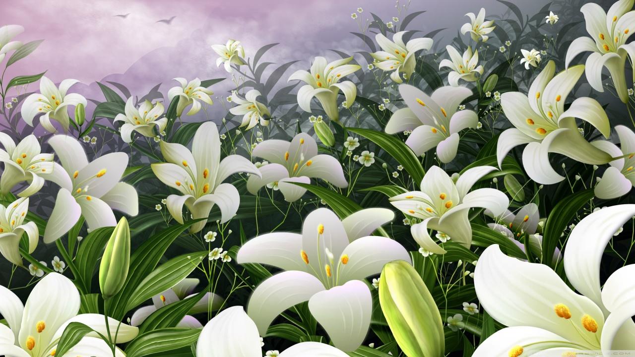 Lilies hd