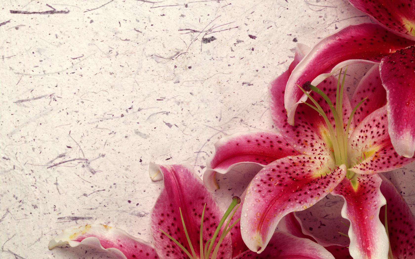 Lily Wallpaper