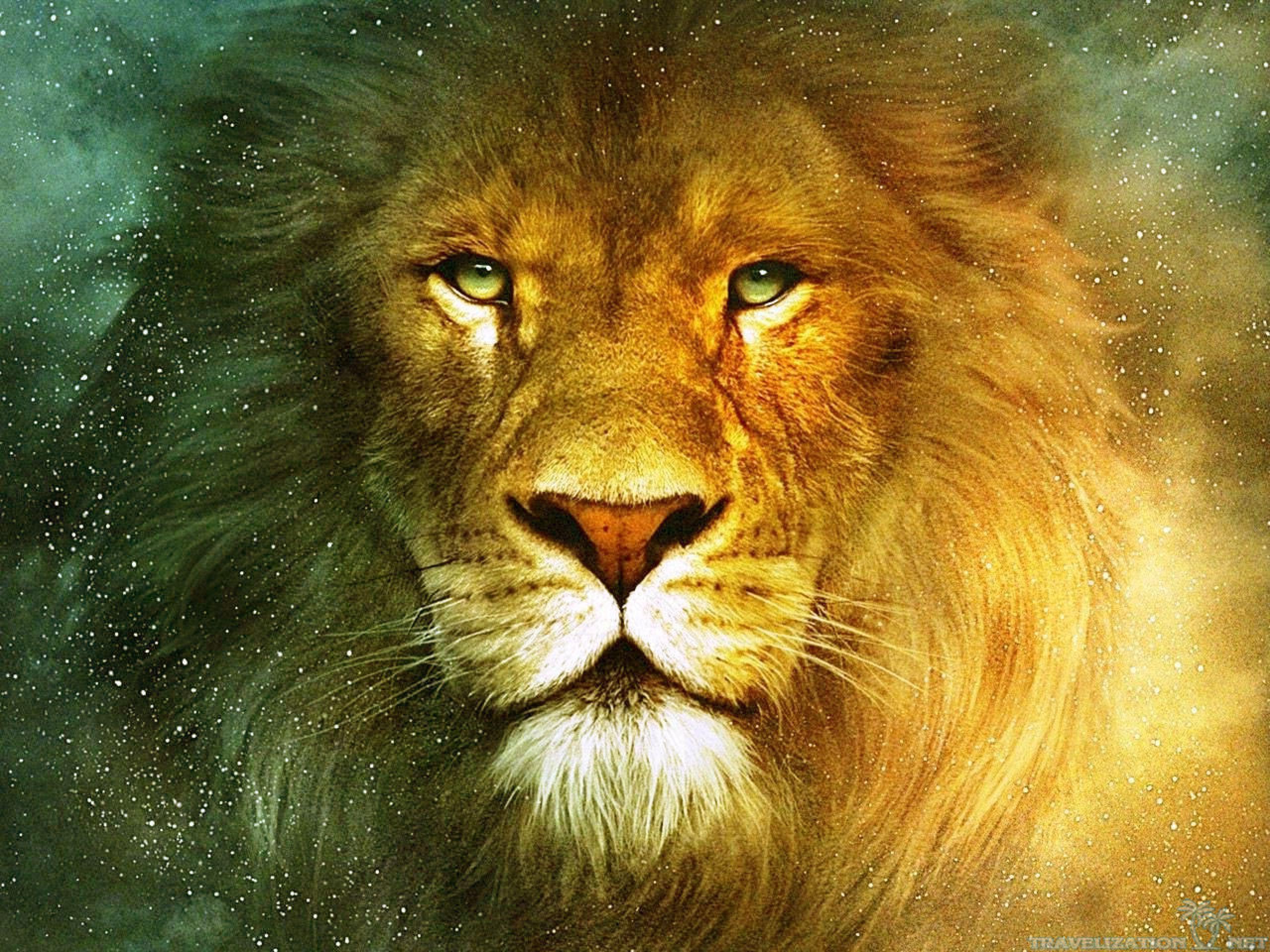 Lion Wallpaper 2560x1920 35567