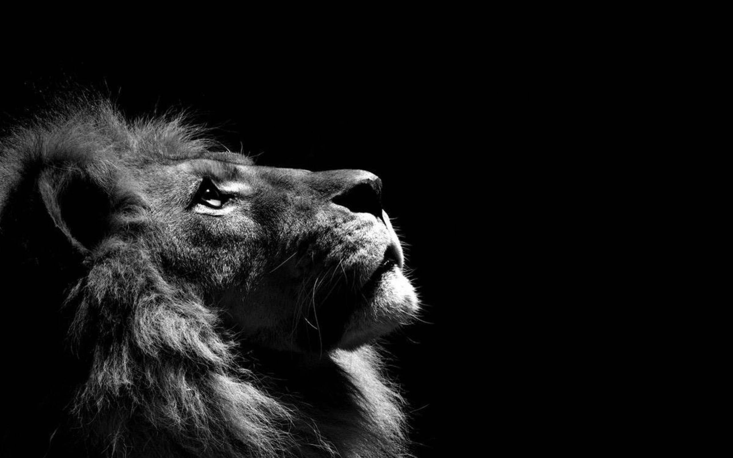 lion animal image HD wallpaper Wallpaper