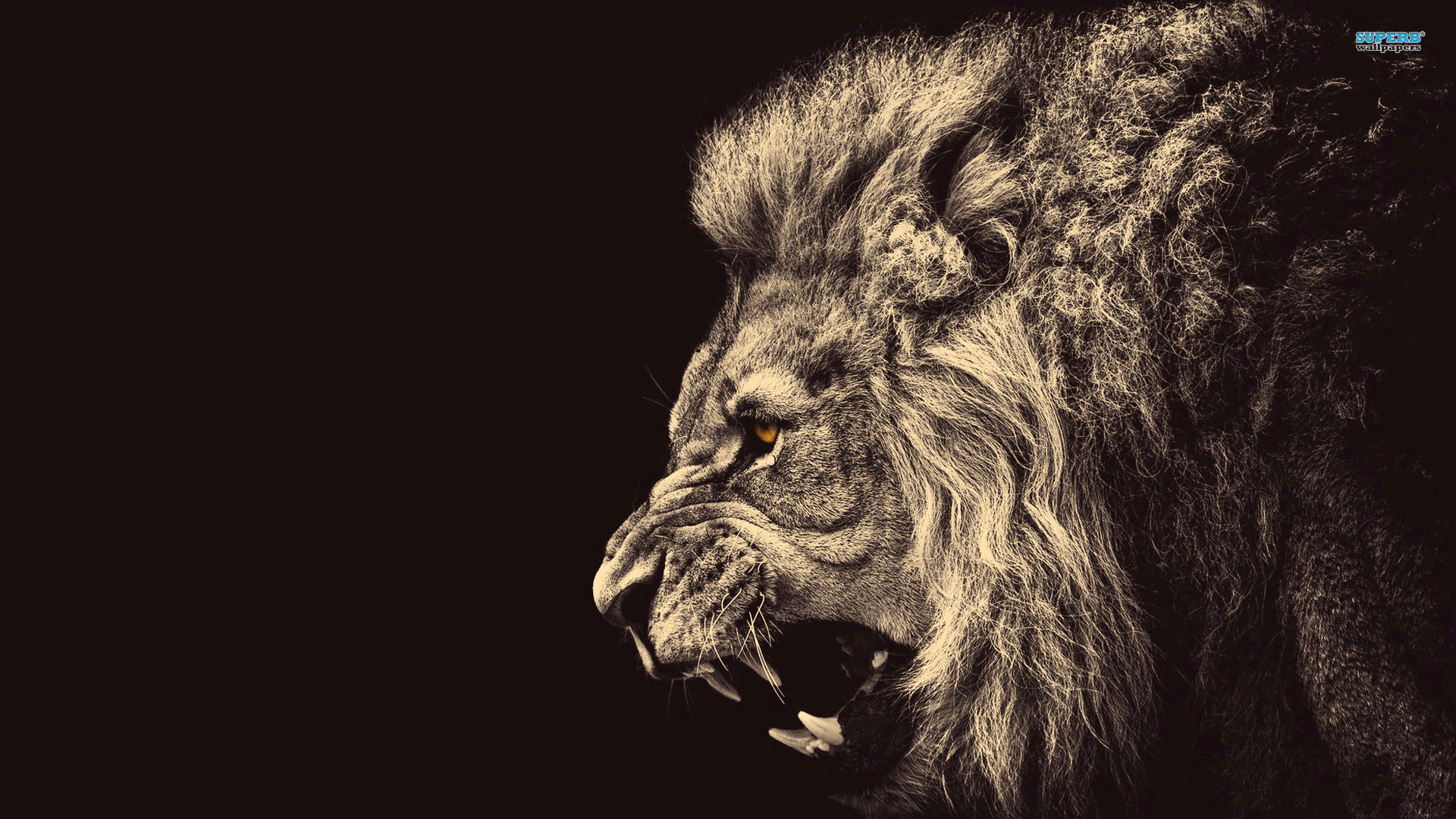 Lion Wallpaper image Photos Wallpaper HD 261 Backgrounds