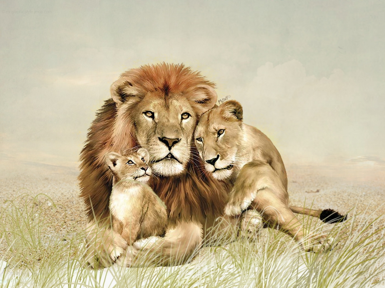 Lion family hd - photo#3