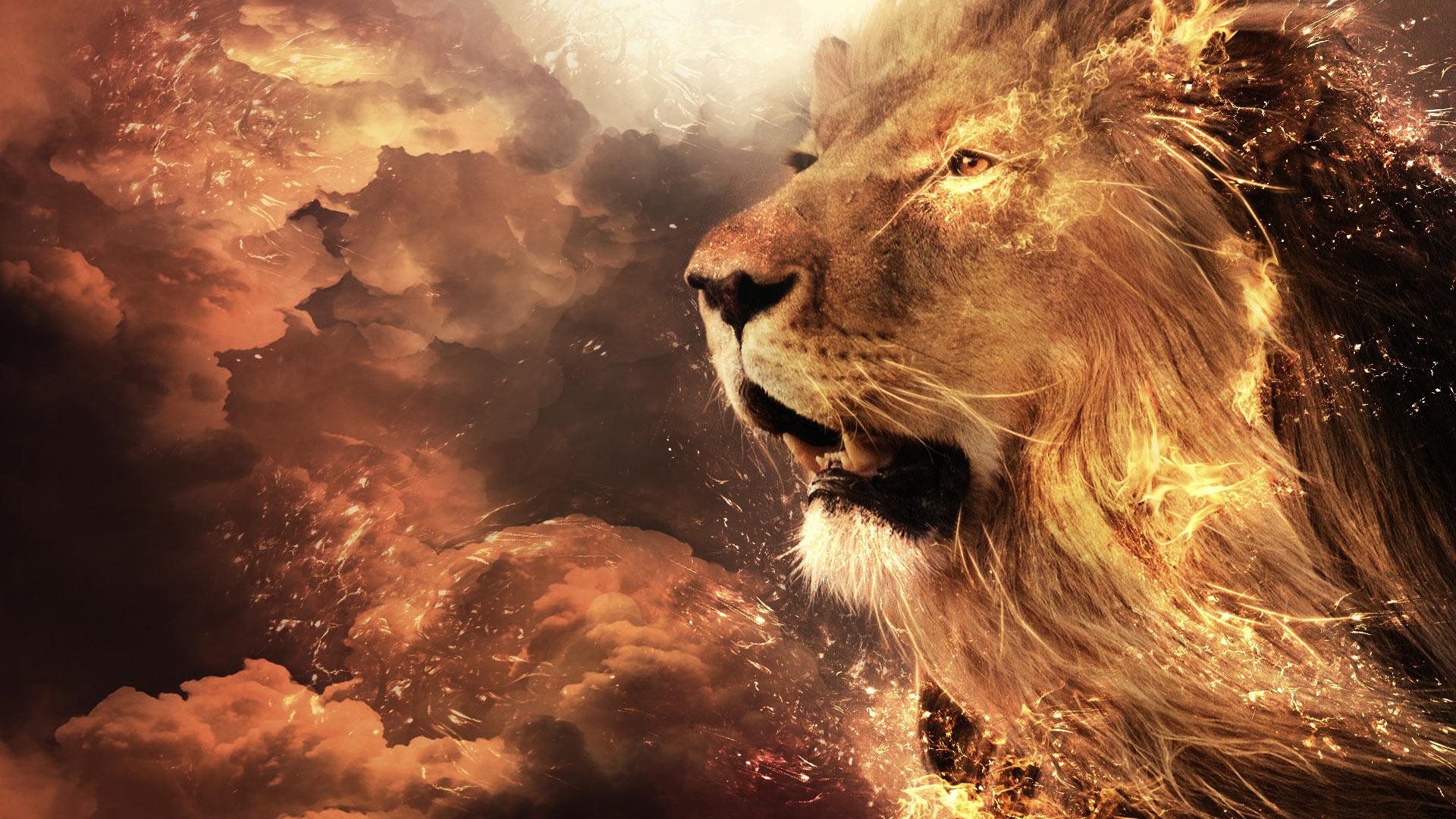 HD Wallpaper | Background ID:498189. 1920x1080 Animal Lion