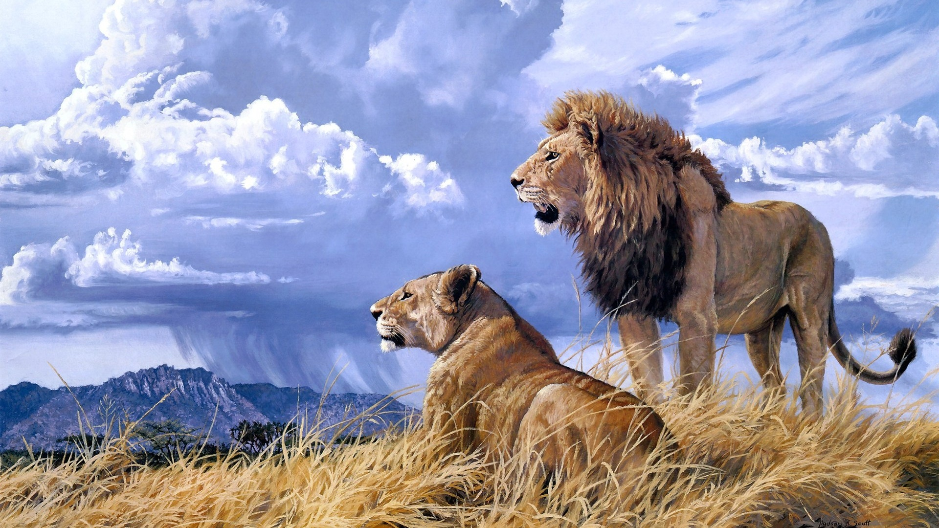 Lions wallpaper for desktop