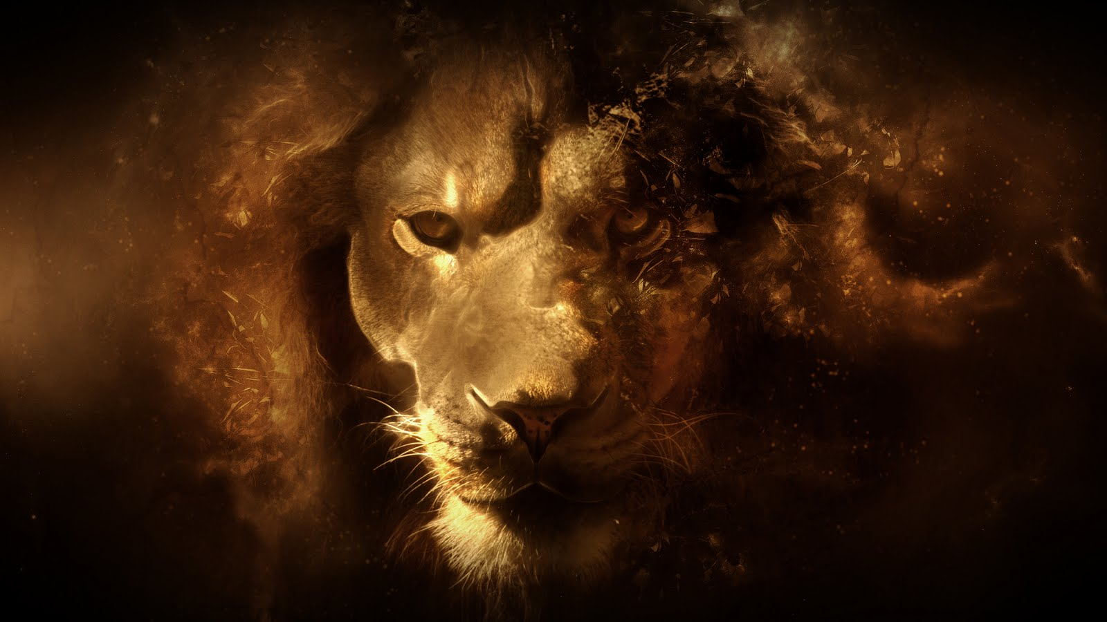 HD Wallpaper   Background ID:151419. 1600x900 Animal Lion