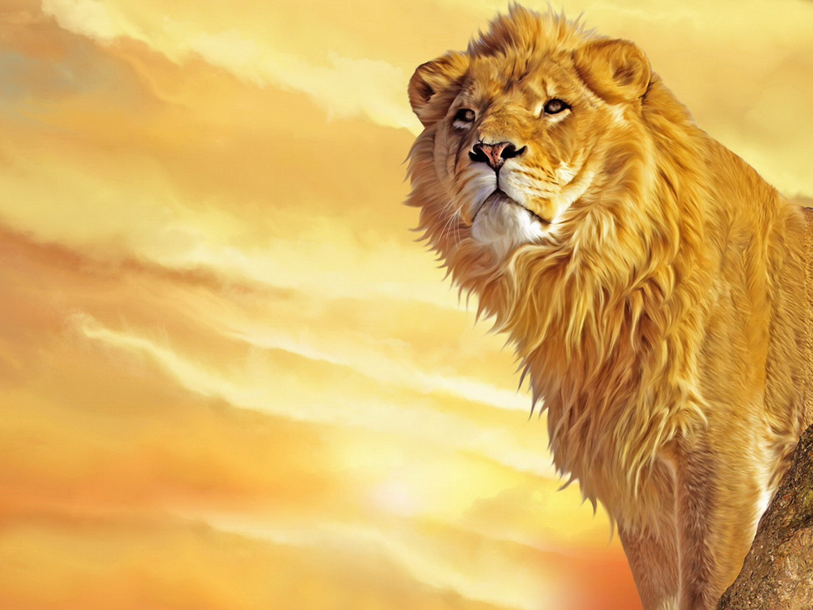Cartoon Lions Lion Painting Xwallpaper Desktop Wallpaper