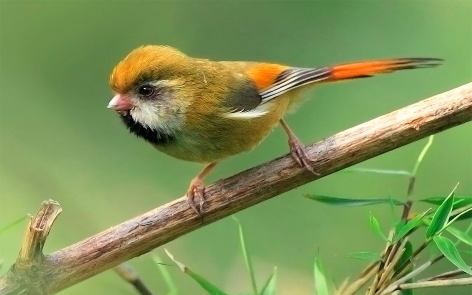 Beautiful Little Bird Wallpapers