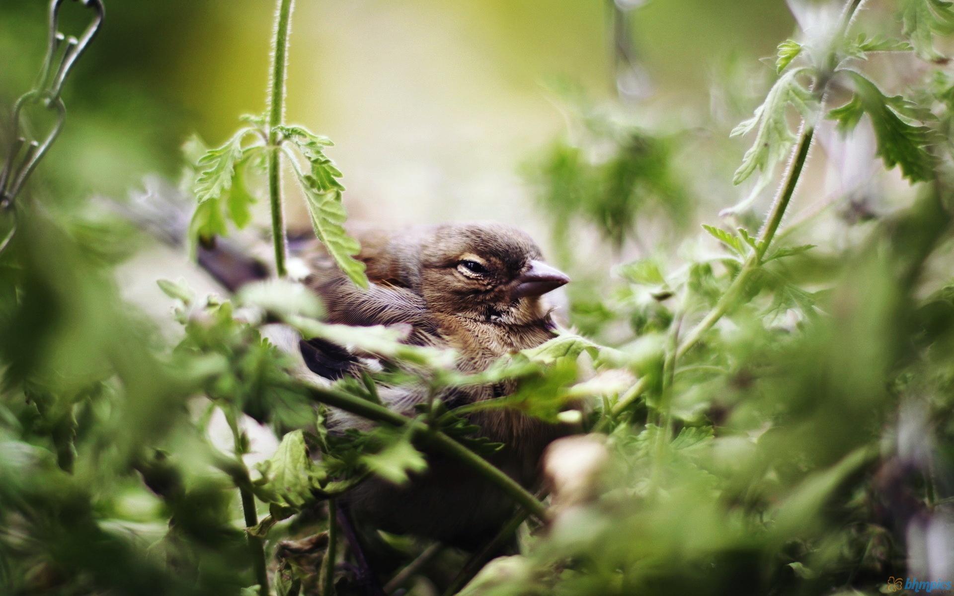 Little Brooding Bird