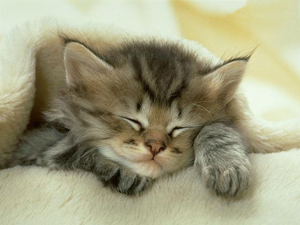 Cute Kittens Cute Little Kitten