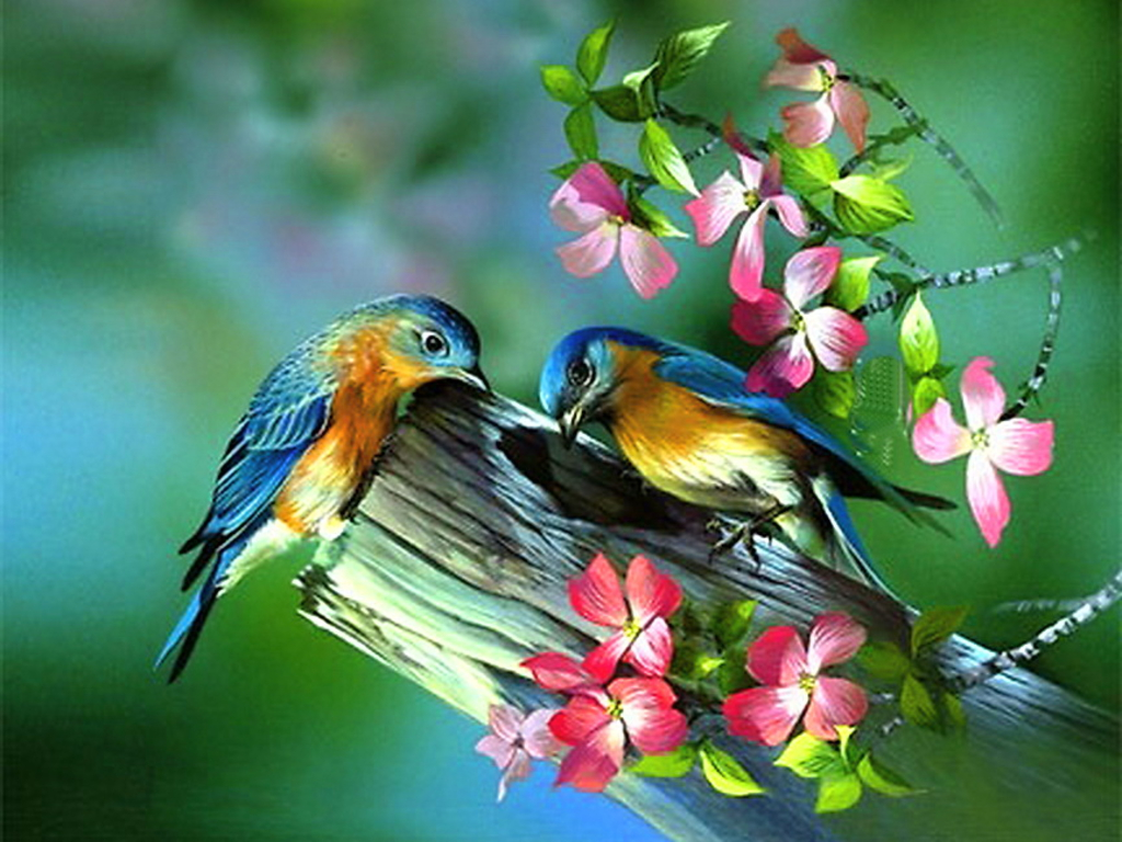 Spring Live Wallpaper 17 Bird Background