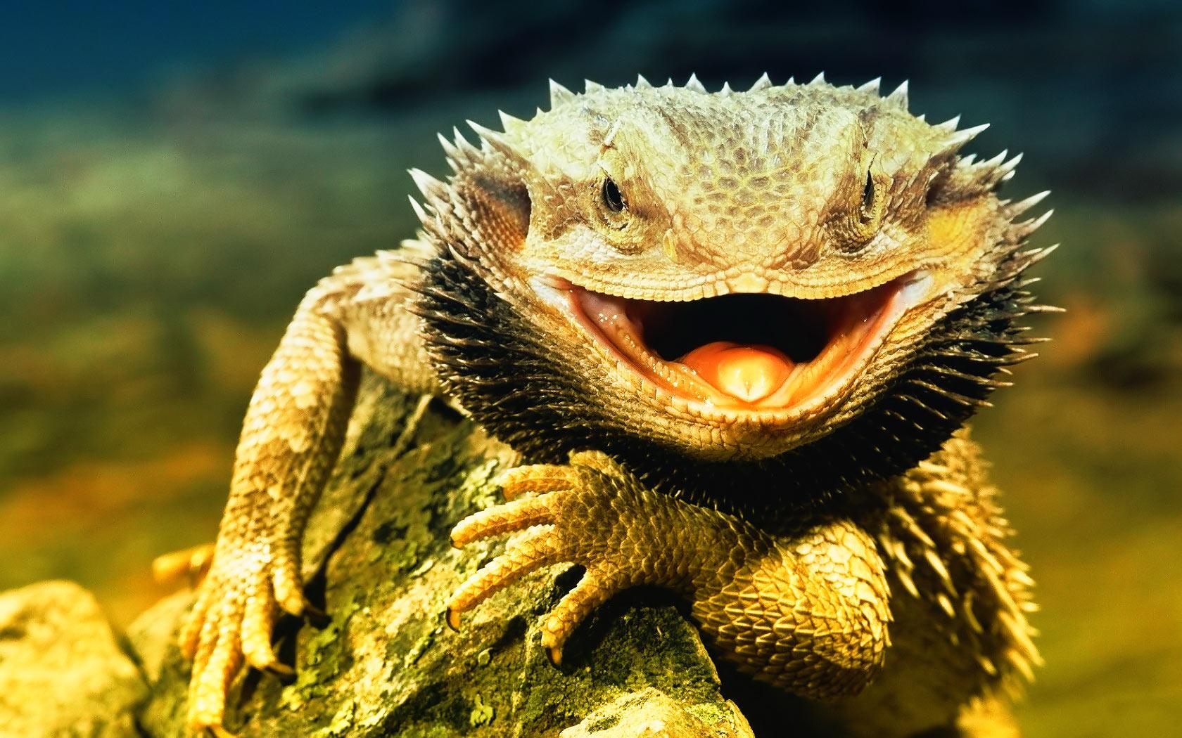 Lizard- Photo#01