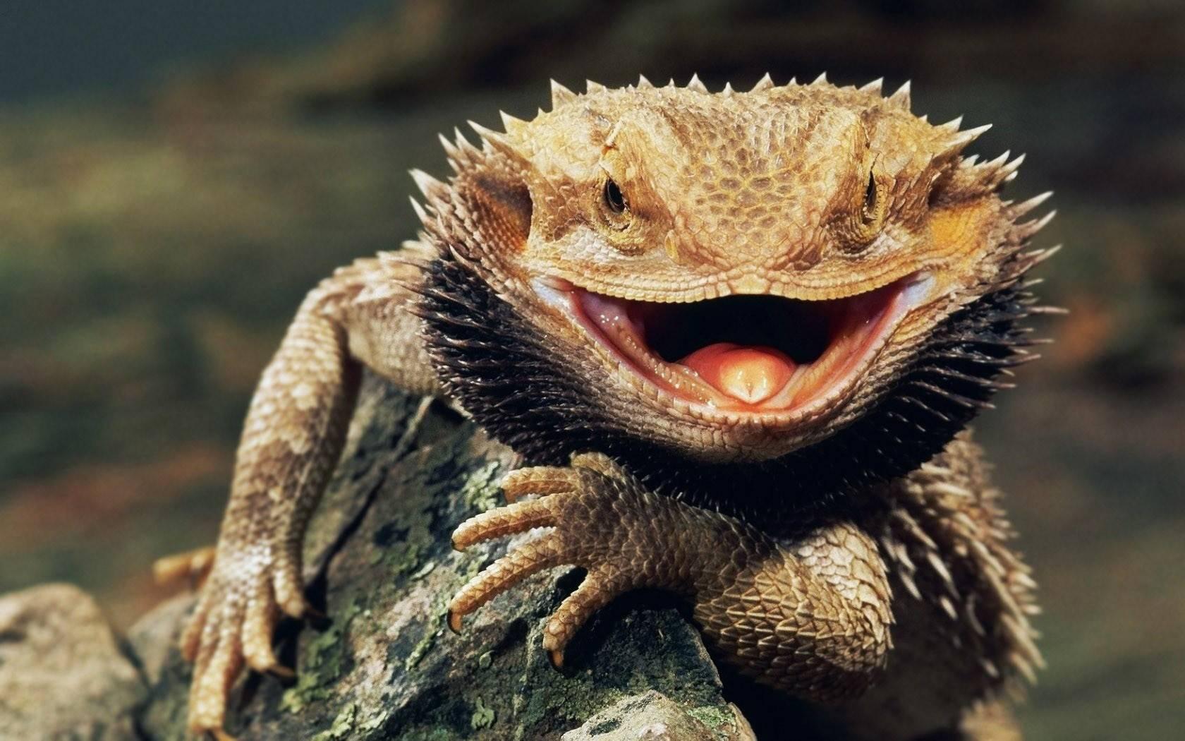 Reptiles Lizards com animals lizard