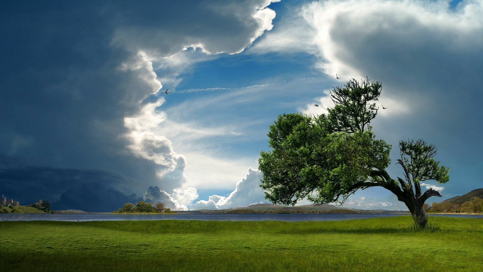 ... Lonely Tree At Shore wallpapers HD free - 458822