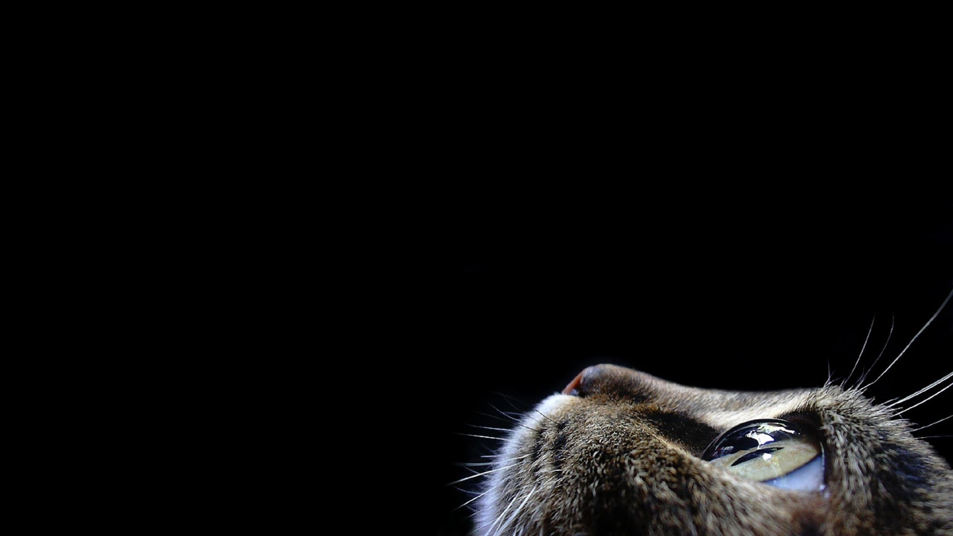 original wallpaper download: Cat looking up on black background - 1920x1080
