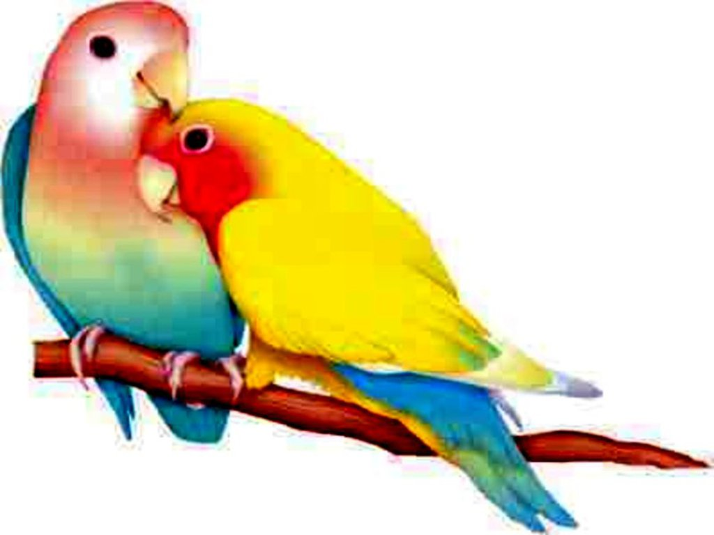 Love Birds Images 24 HD Wallpapers