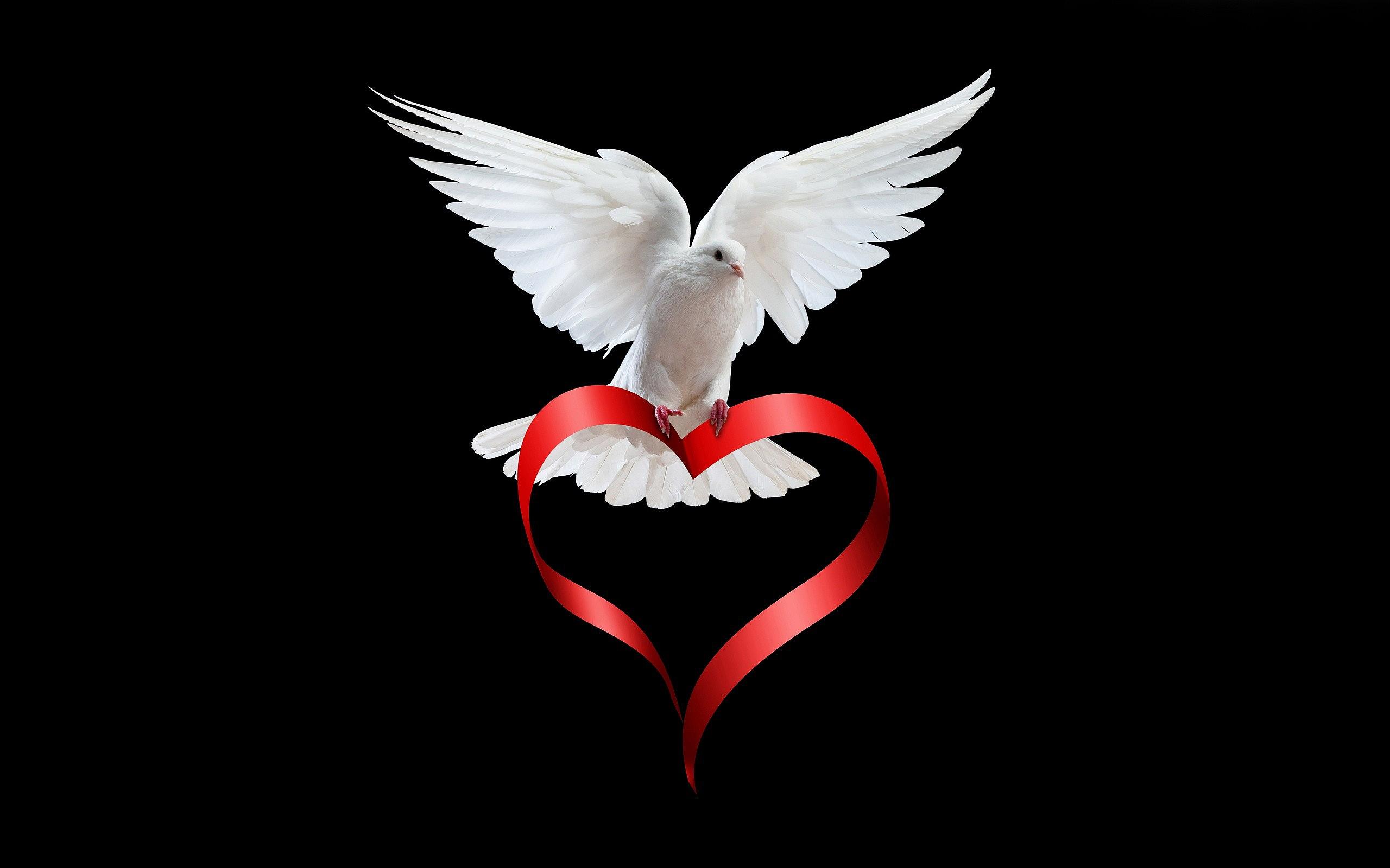 Love white Dove