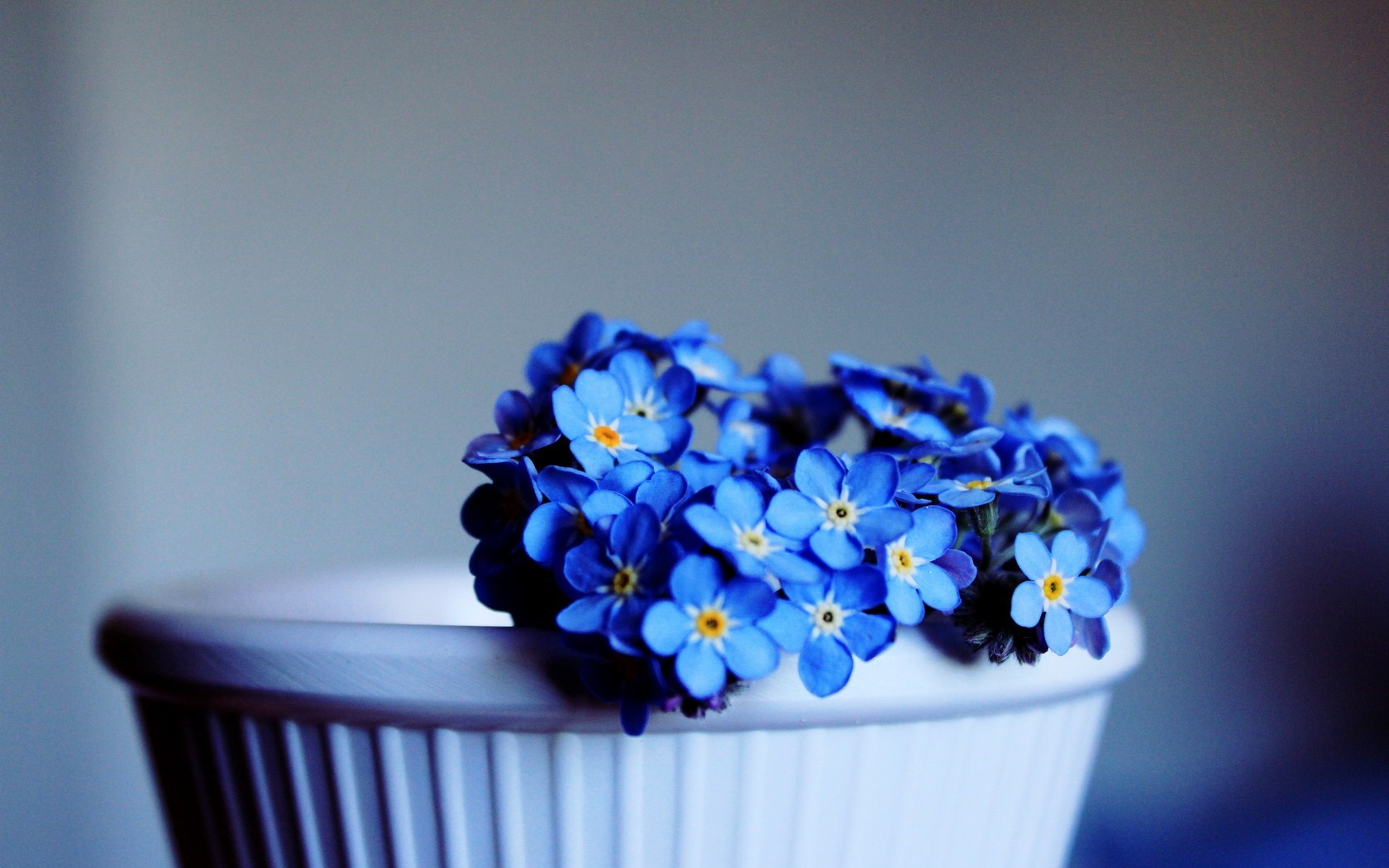 Lovely Blue Flowers Wallpaper