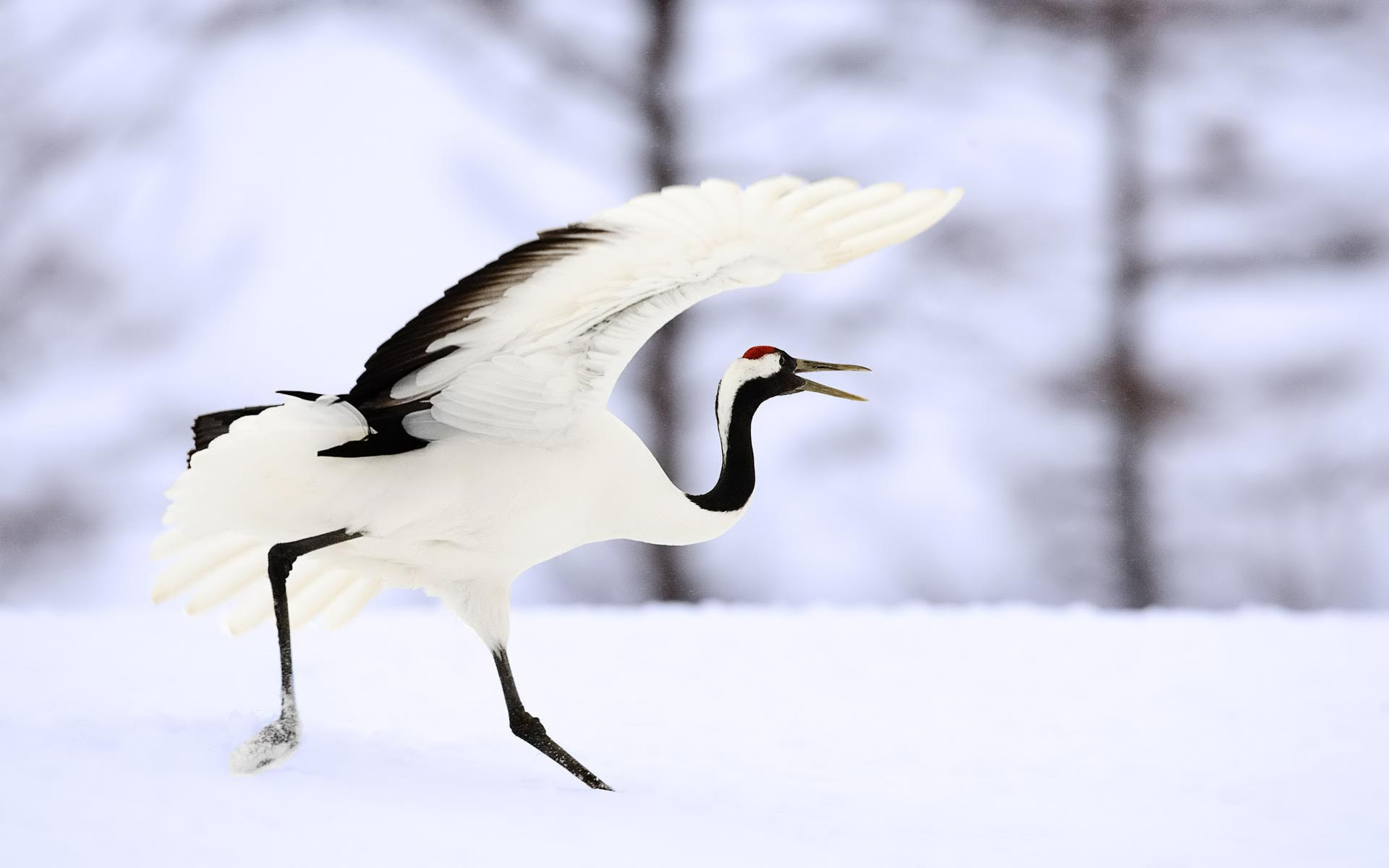 Lovely Crane Bird Wallpaper