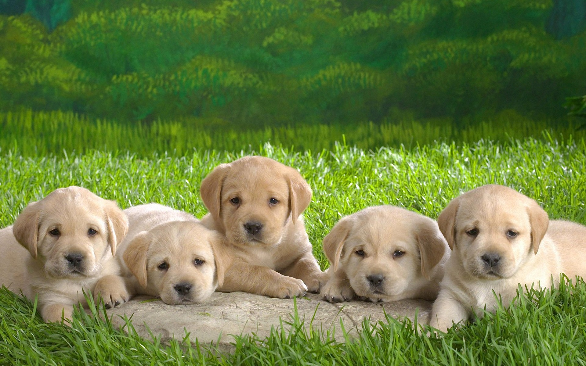 Lovely Dog Wallpaper 9338