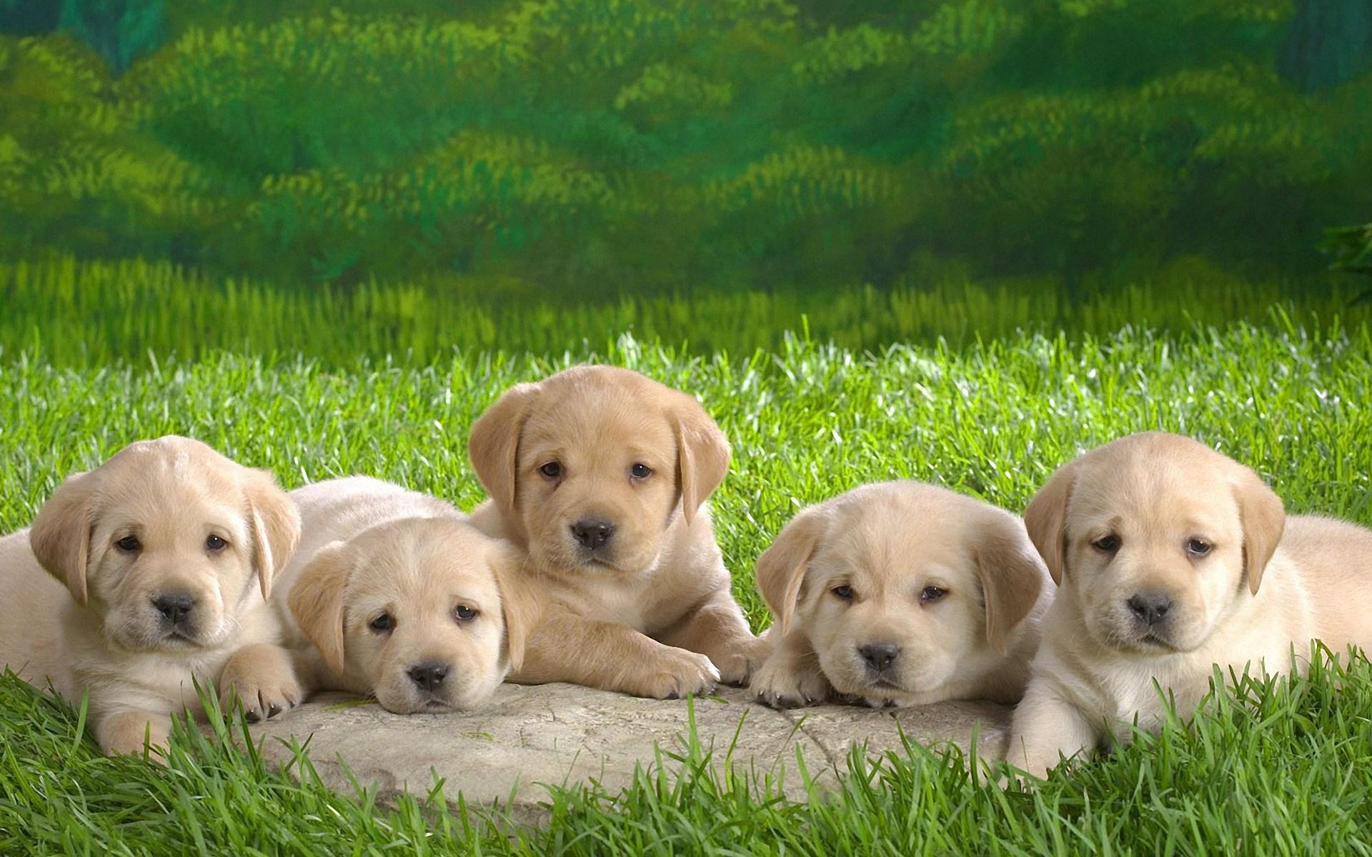 Lovely Dog Wallpaper 9338
