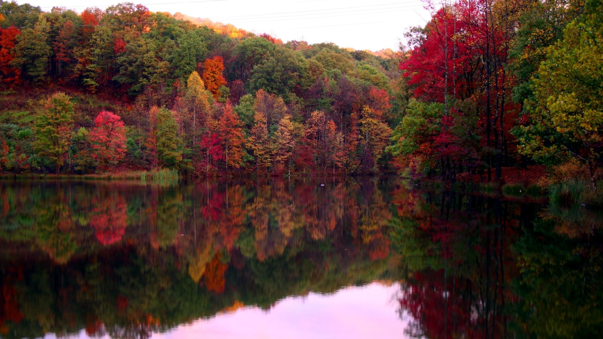 Lovely Fall Trees Wallpaper