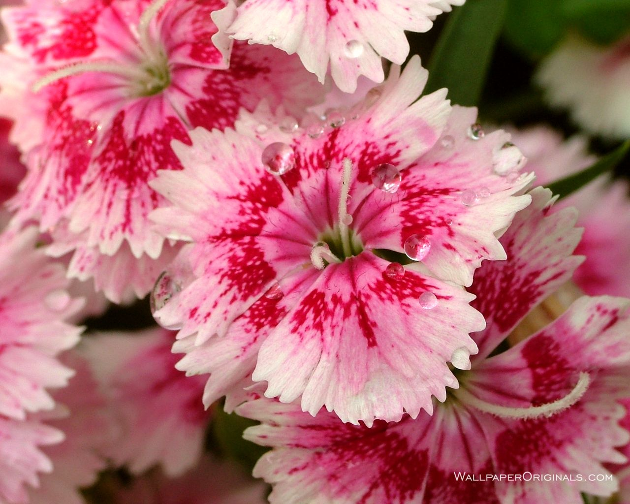 Lovely Flower Pictures