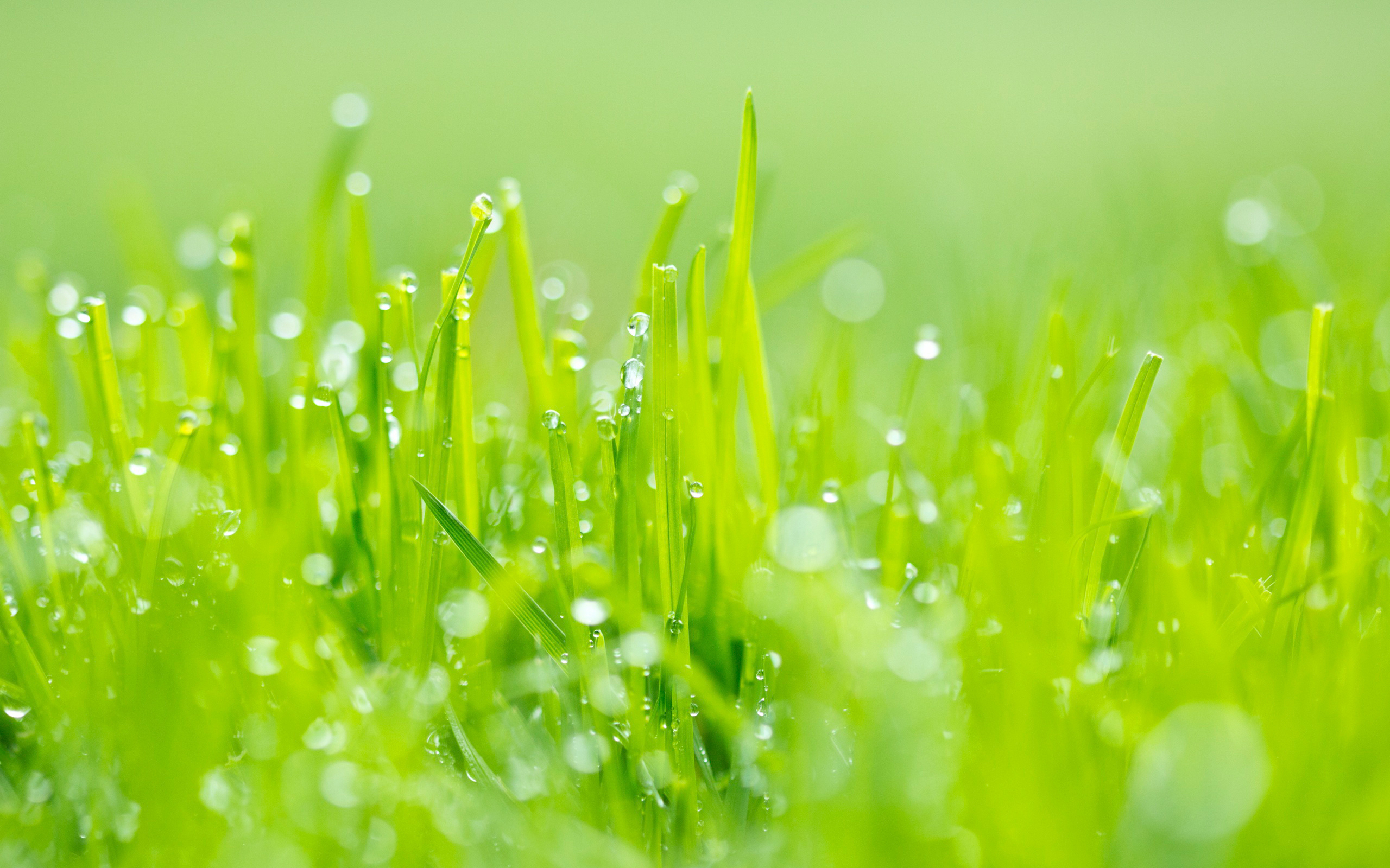 Lovely Grass Wallpaper