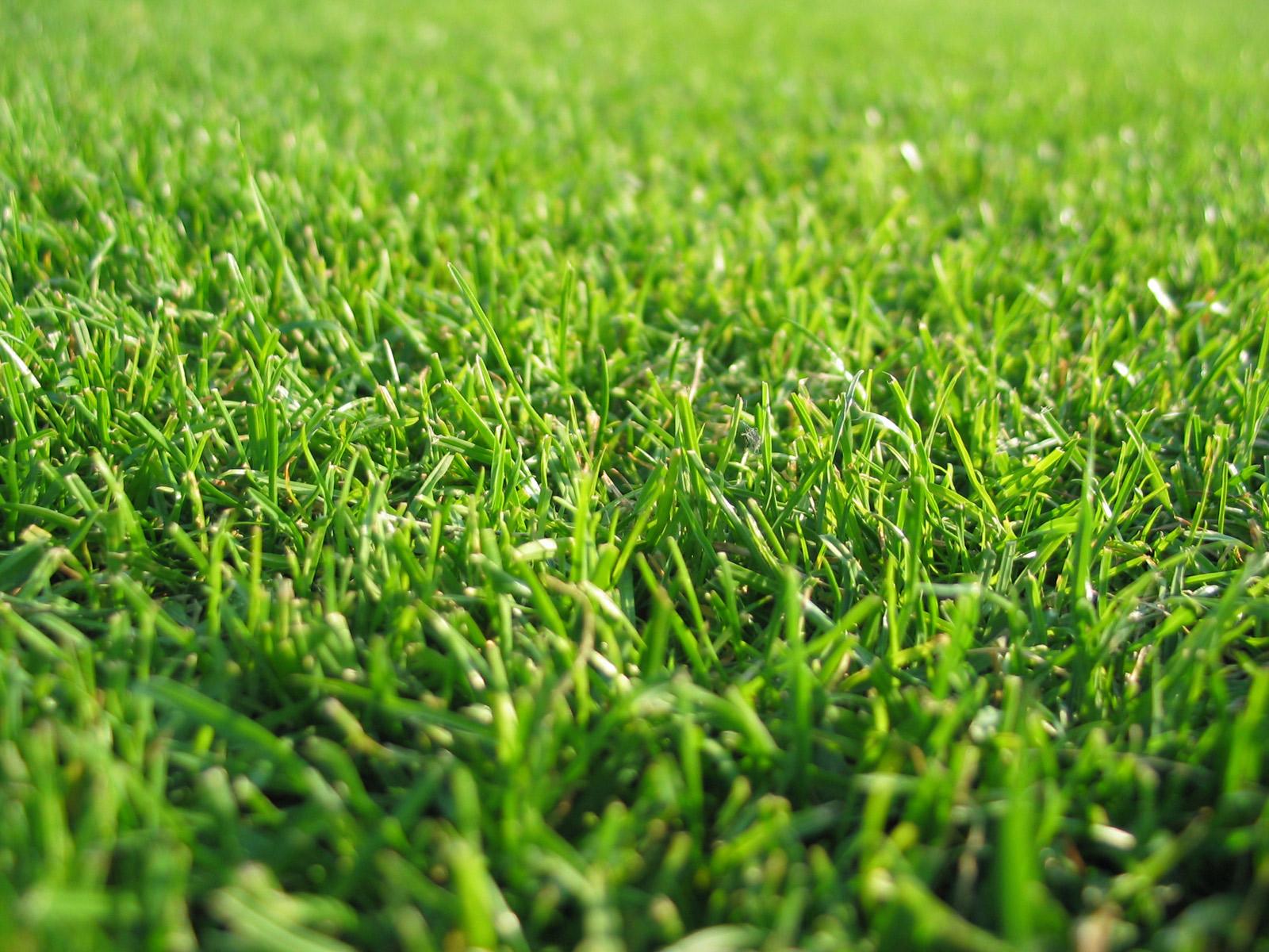 lovely grass wallpaper