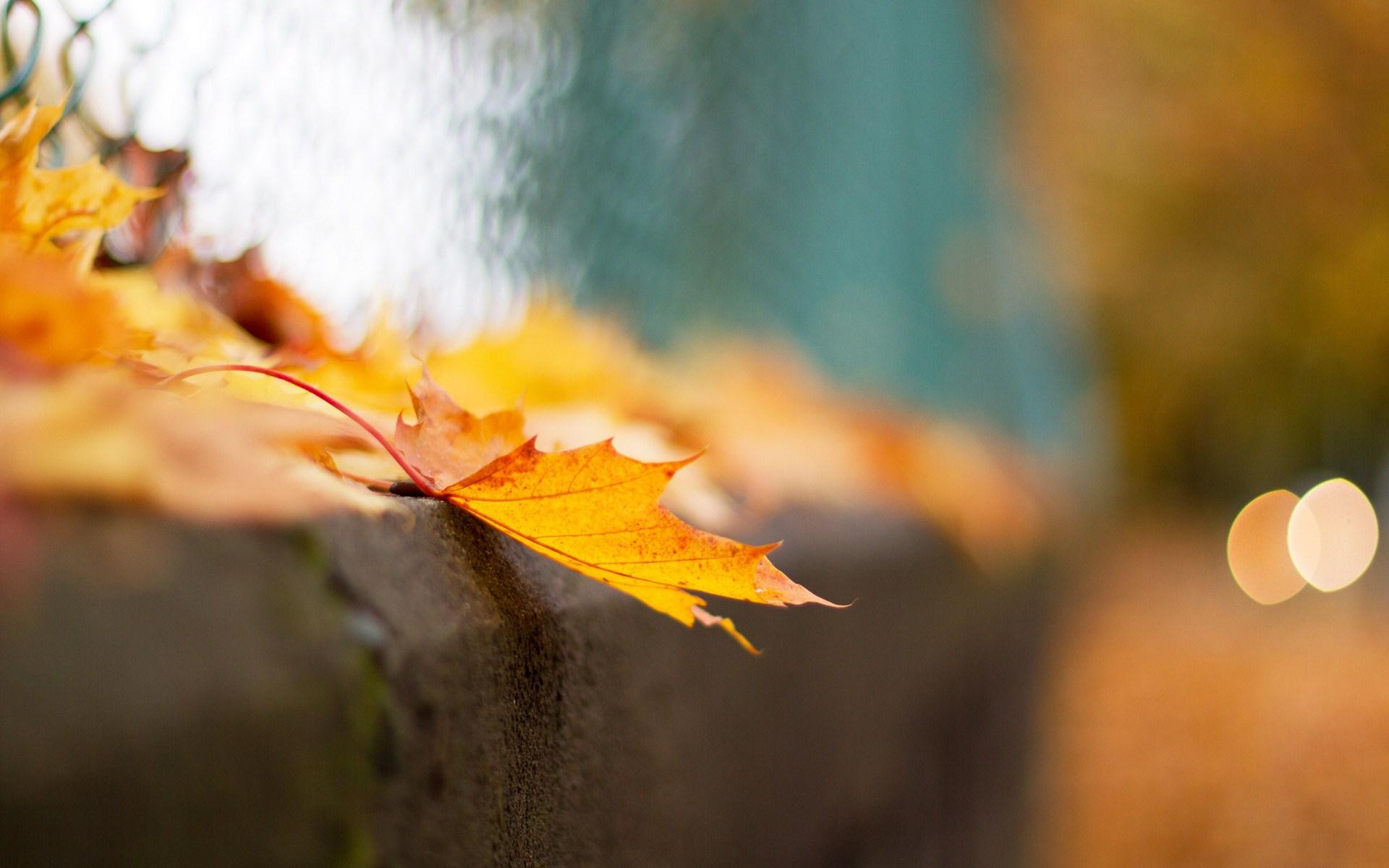 Lovely Leaf Macro Wallpaper